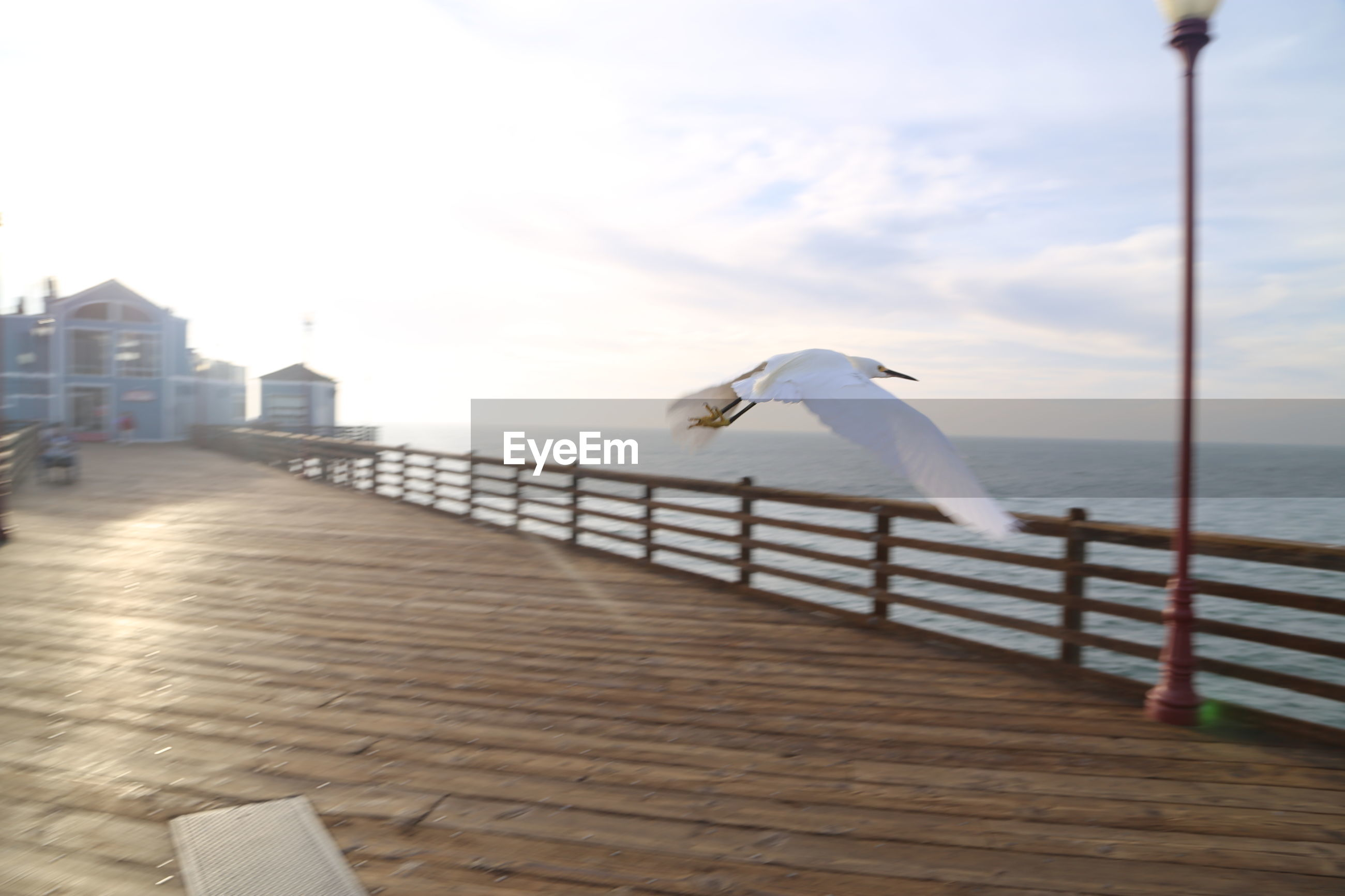 Seagull flying over pier against sky