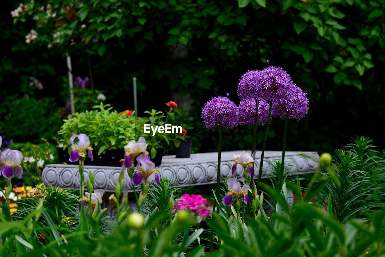Purple Flowering Plants In Park