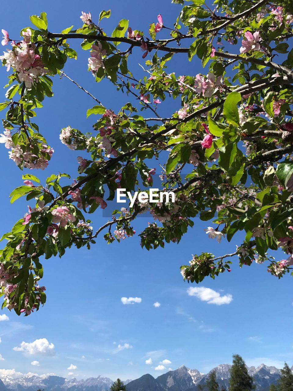 tree, growth, nature, branch, leaf, beauty in nature, day, sky, low angle view, fruit, no people, blue, outdoors, sunlight, flower, plant, freshness