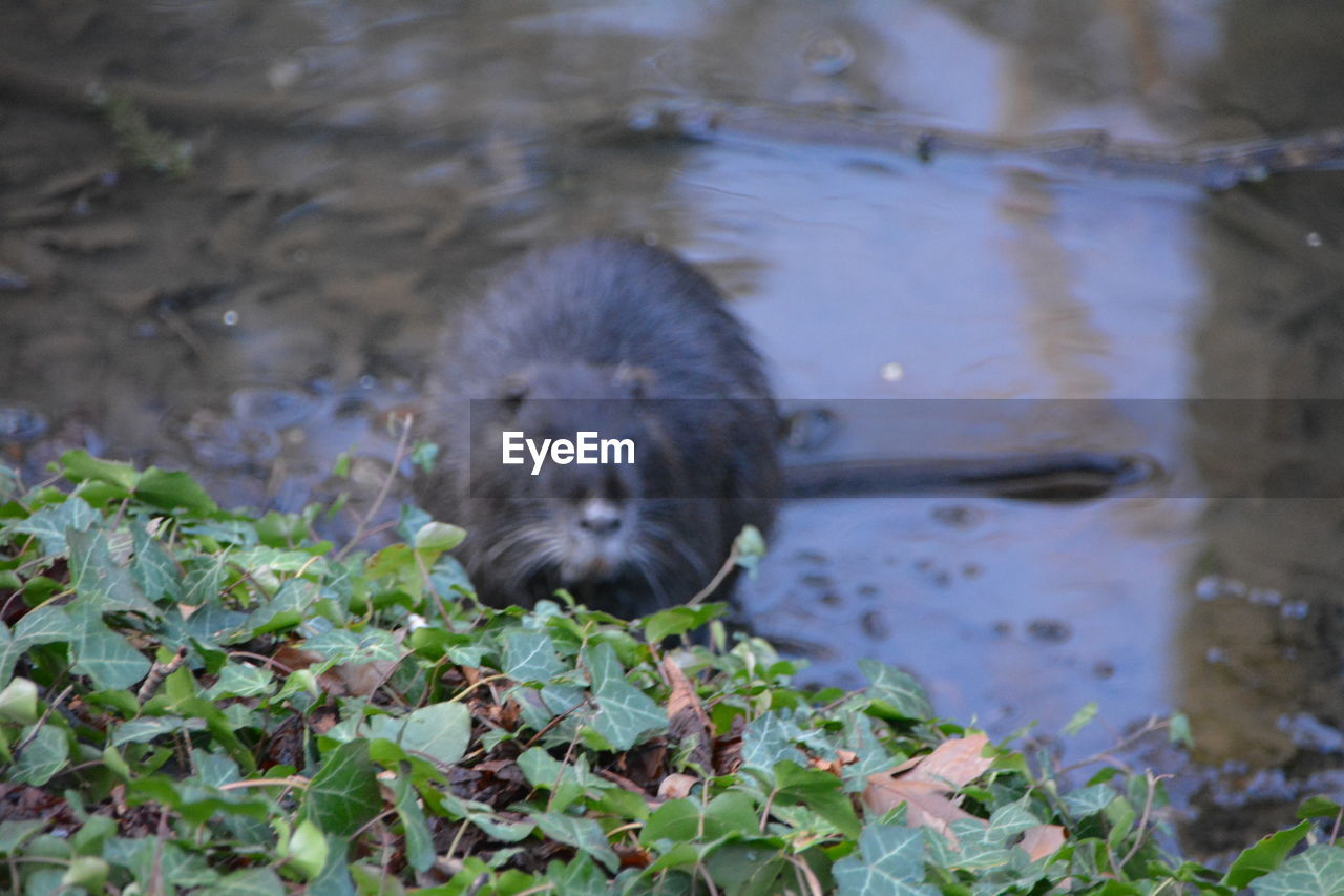 one animal, animal themes, mammal, nature, no people, outdoors, water, day, animals in the wild, close-up, domestic animals