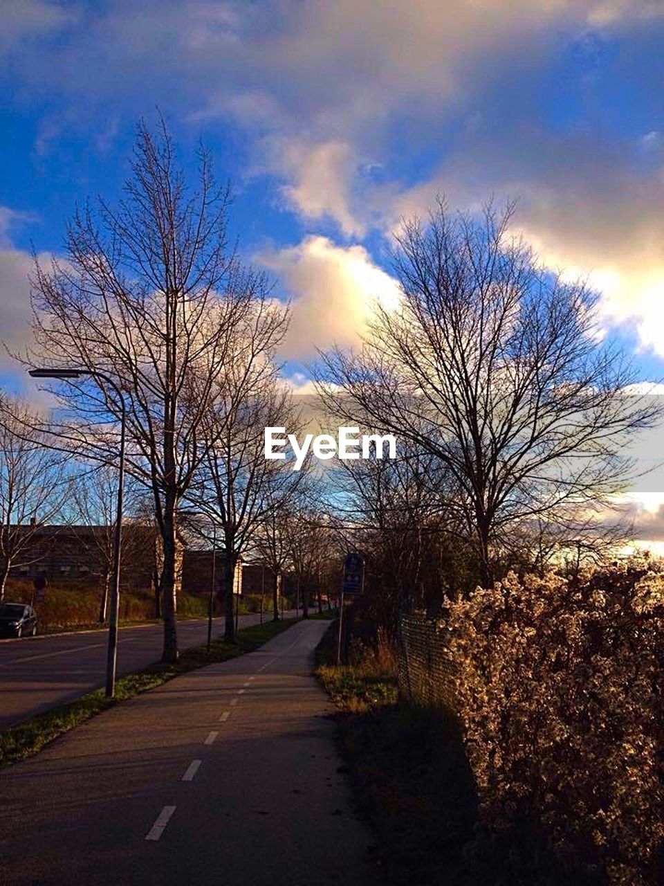 tree, bare tree, road, the way forward, sky, cloud - sky, outdoors, day, nature, branch, travel destinations, no people, beauty in nature, city