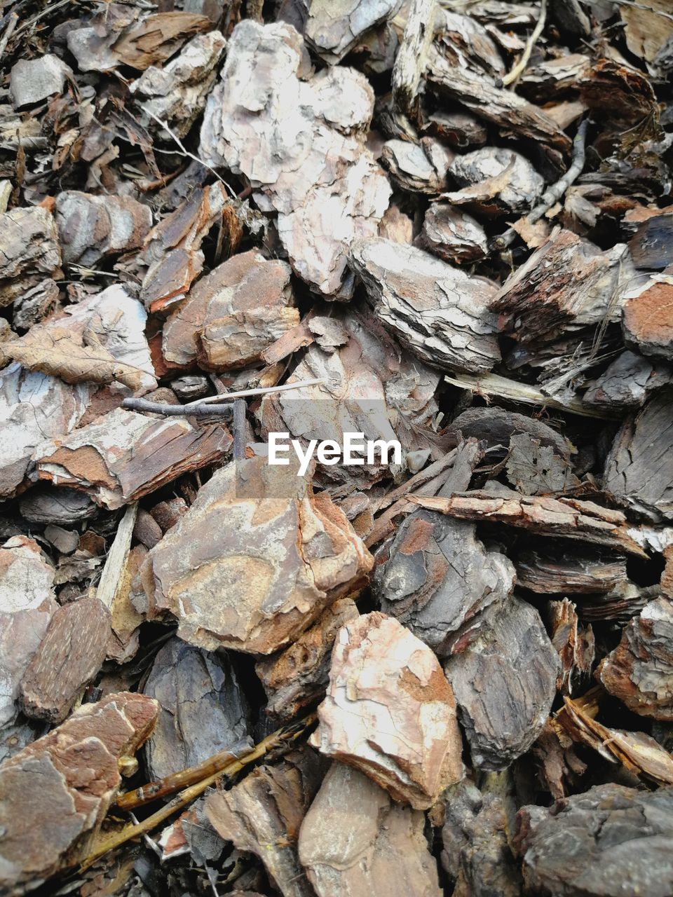 full frame, backgrounds, no people, day, nature, abundance, large group of objects, plant part, leaf, dry, textured, high angle view, outdoors, leaves, close-up, rock, field, solid, land, heap, dried