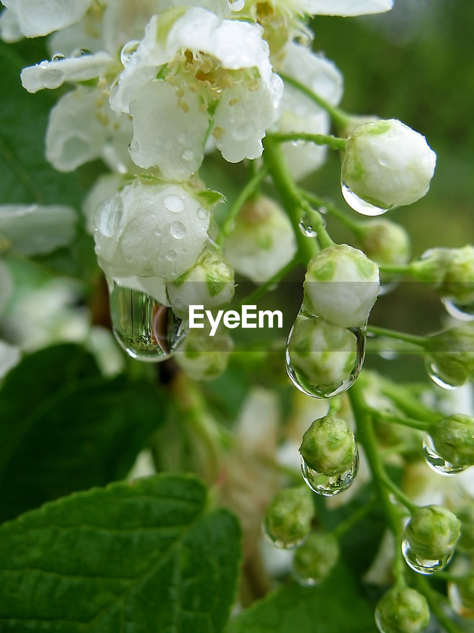 green color, drop, growth, plant, beauty in nature, nature, no people, close-up, freshness, leaf, day, water, outdoors, fragility, flower