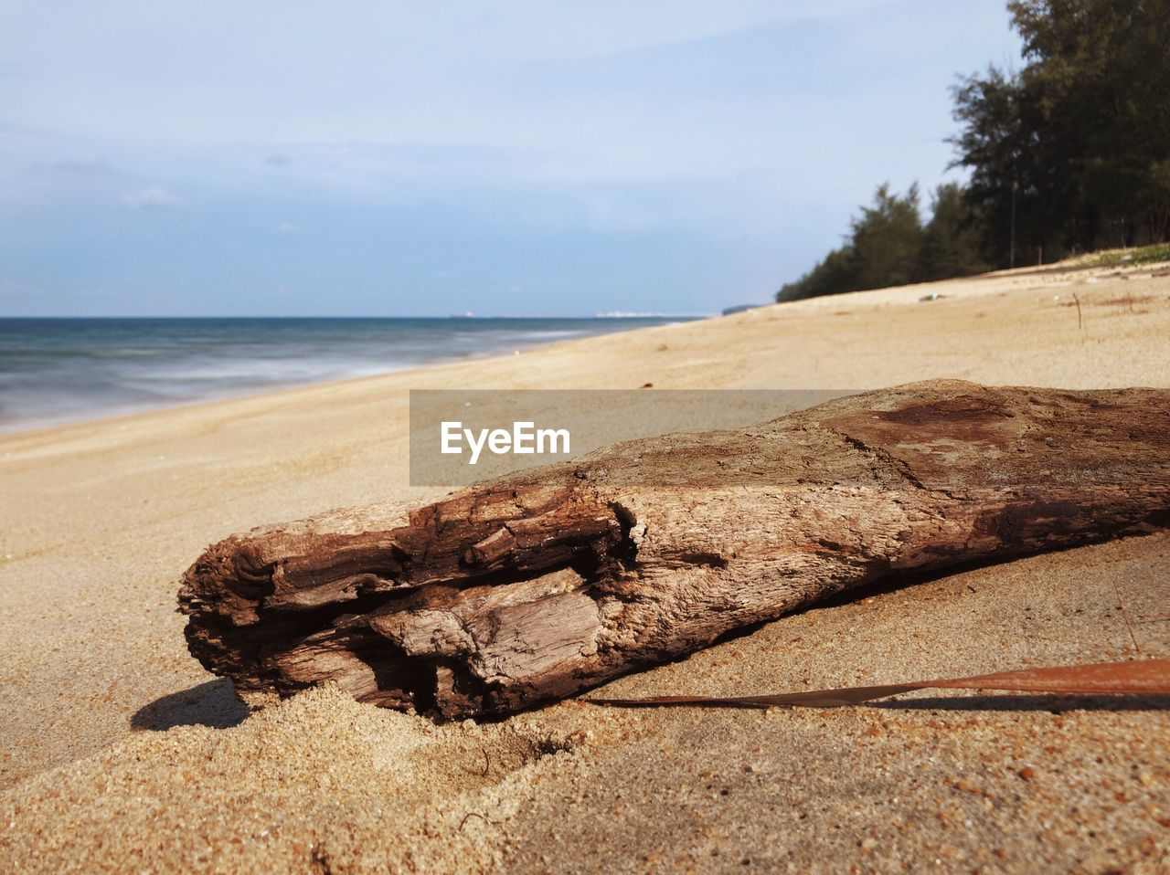 sea, water, sky, beach, land, nature, scenics - nature, horizon over water, day, tranquil scene, tranquility, no people, horizon, beauty in nature, focus on foreground, sand, rock, outdoors, tree, driftwood, wood