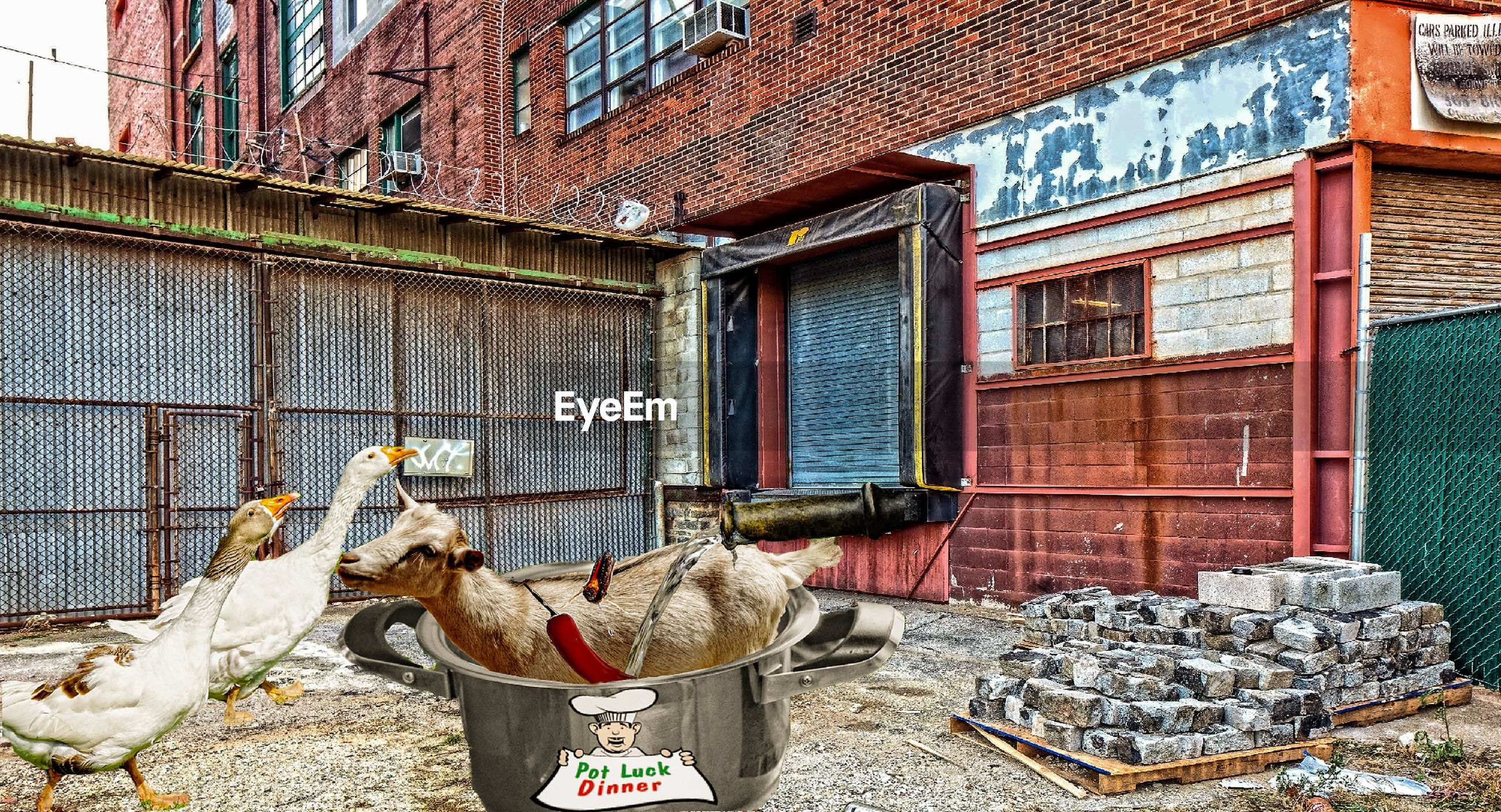 built structure, architecture, window, animal themes, bird, building exterior, no people, day, domestic animals, livestock, outdoors, mammal, hen
