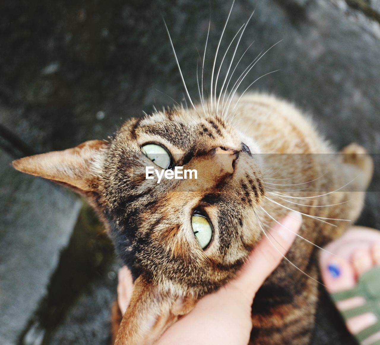 Cropped image of woman holding tabby cat