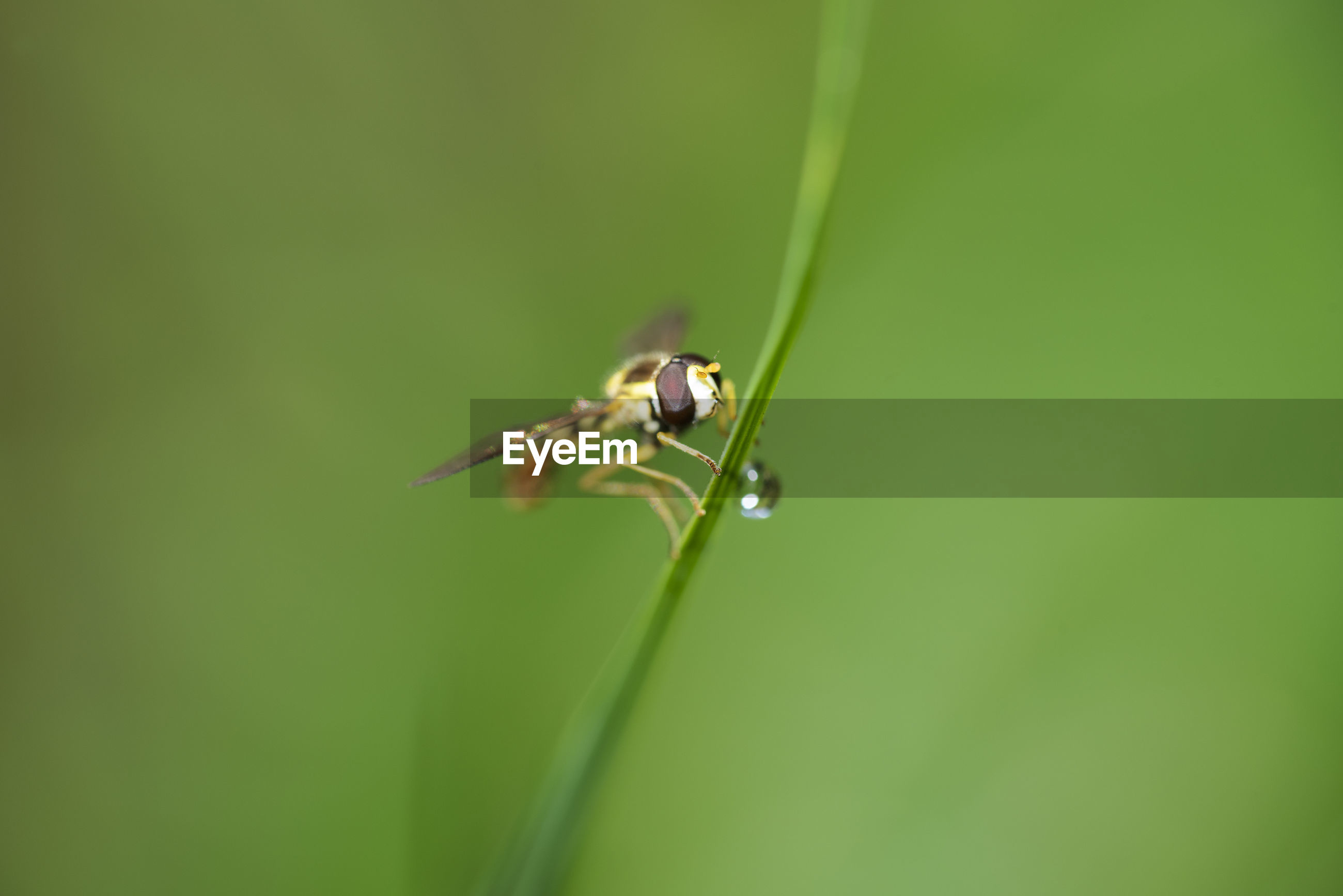 Close-up of insect on leaf, the wasp