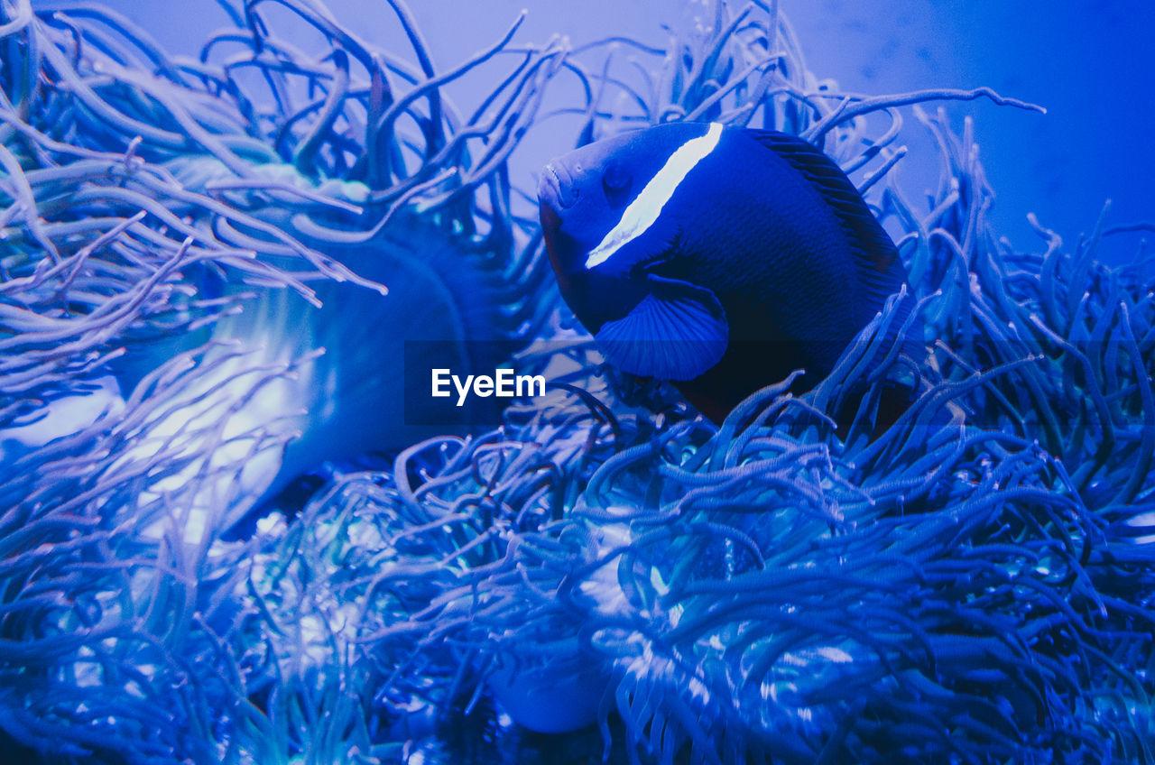 animals in the wild, underwater, animal themes, water, animal, swimming, sea, animal wildlife, sea life, marine, fish, vertebrate, undersea, group of animals, blue, no people, close-up, nature