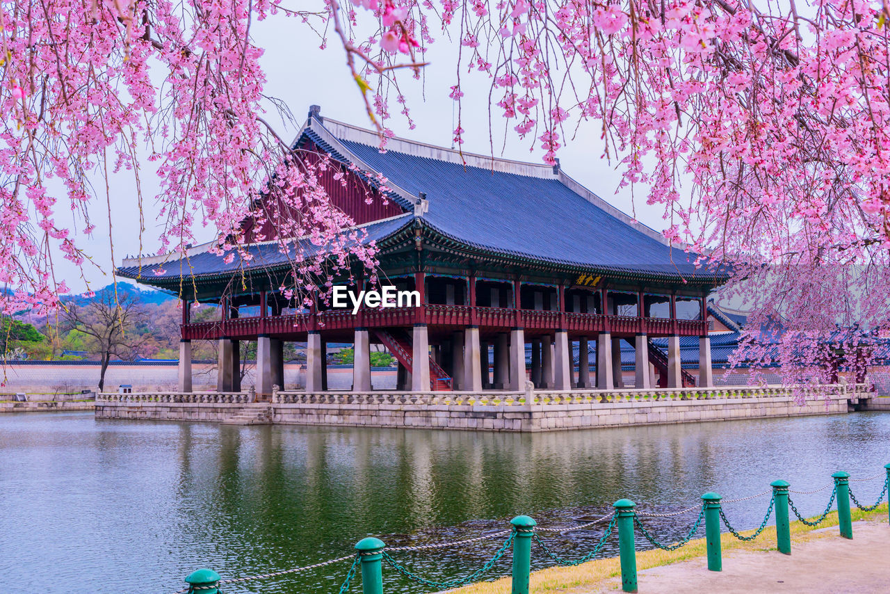 built structure, architecture, building exterior, tree, plant, nature, water, flower, building, pink color, flowering plant, no people, day, waterfront, travel destinations, beauty in nature, lake, growth, outdoors, cherry blossom, springtime, architectural column