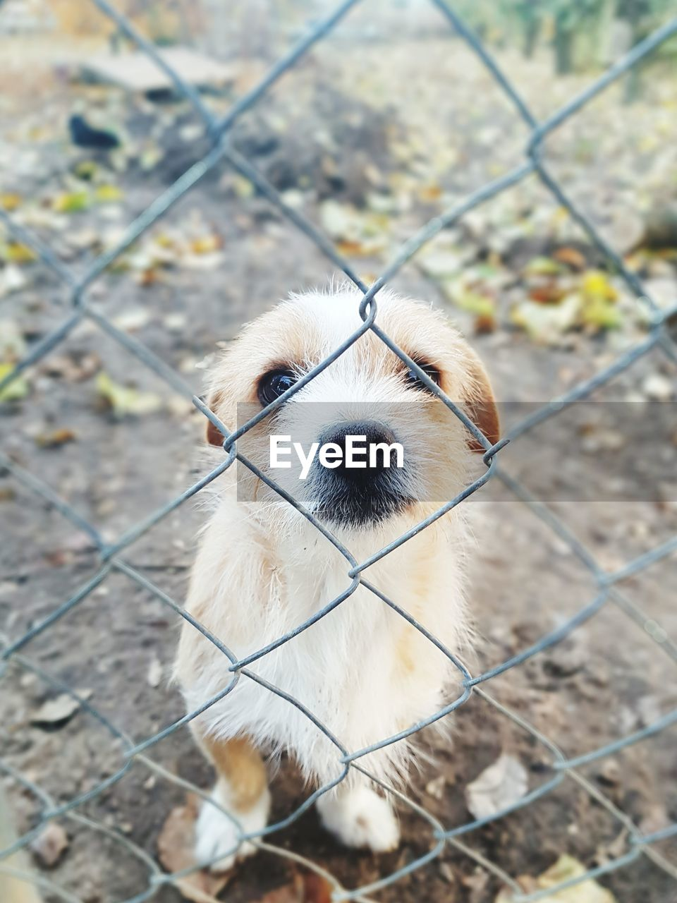 one animal, animal themes, mammal, animal, canine, dog, domestic animals, pets, vertebrate, fence, domestic, boundary, portrait, no people, barrier, focus on foreground, day, looking at camera, young animal, chainlink fence, animal head, outdoors
