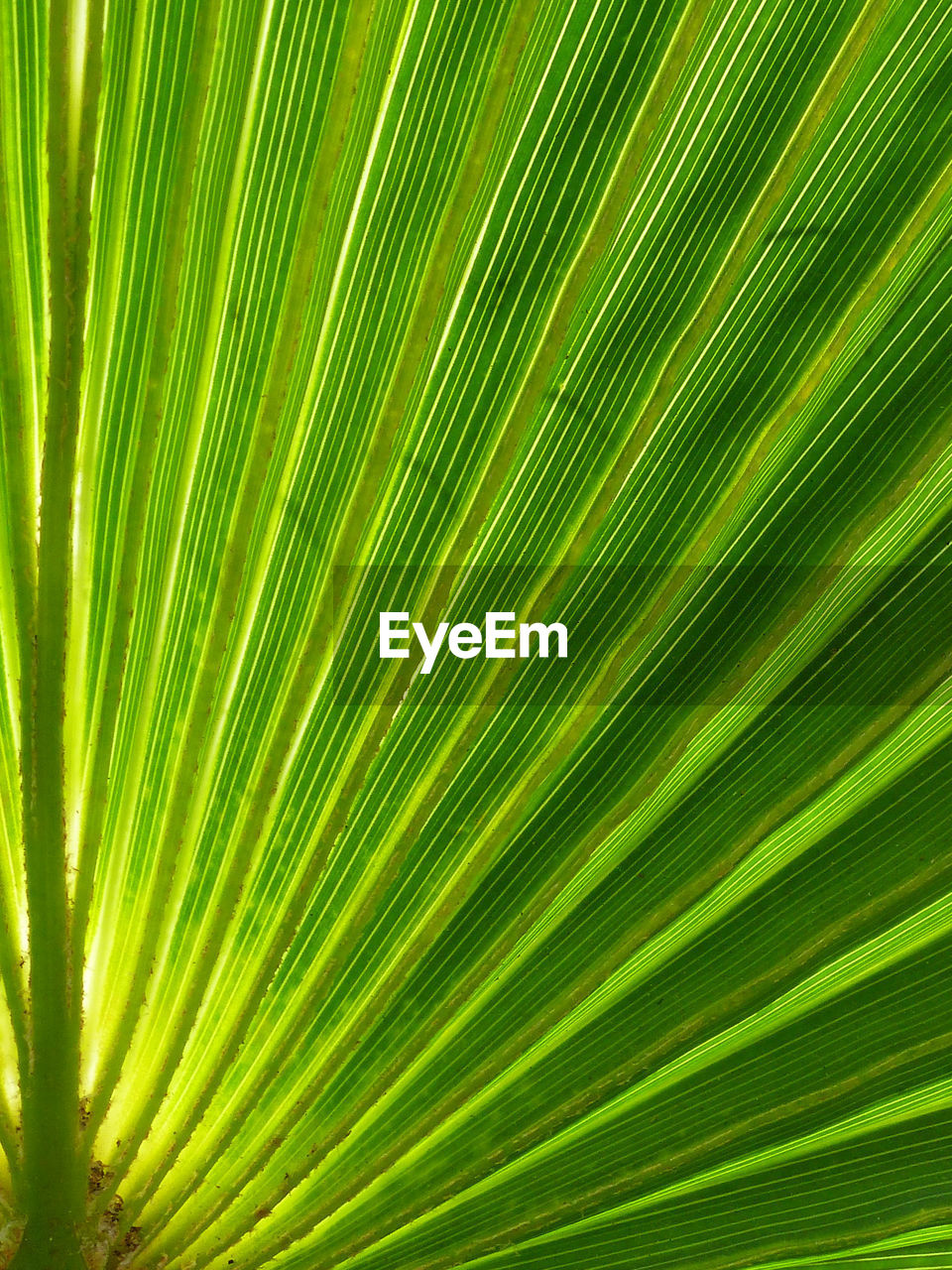 palm leaf, frond, nature, green color, palm tree, leaf, growth, backgrounds, close-up, plant, tree, day, no people, full frame, freshness, outdoors, beauty in nature