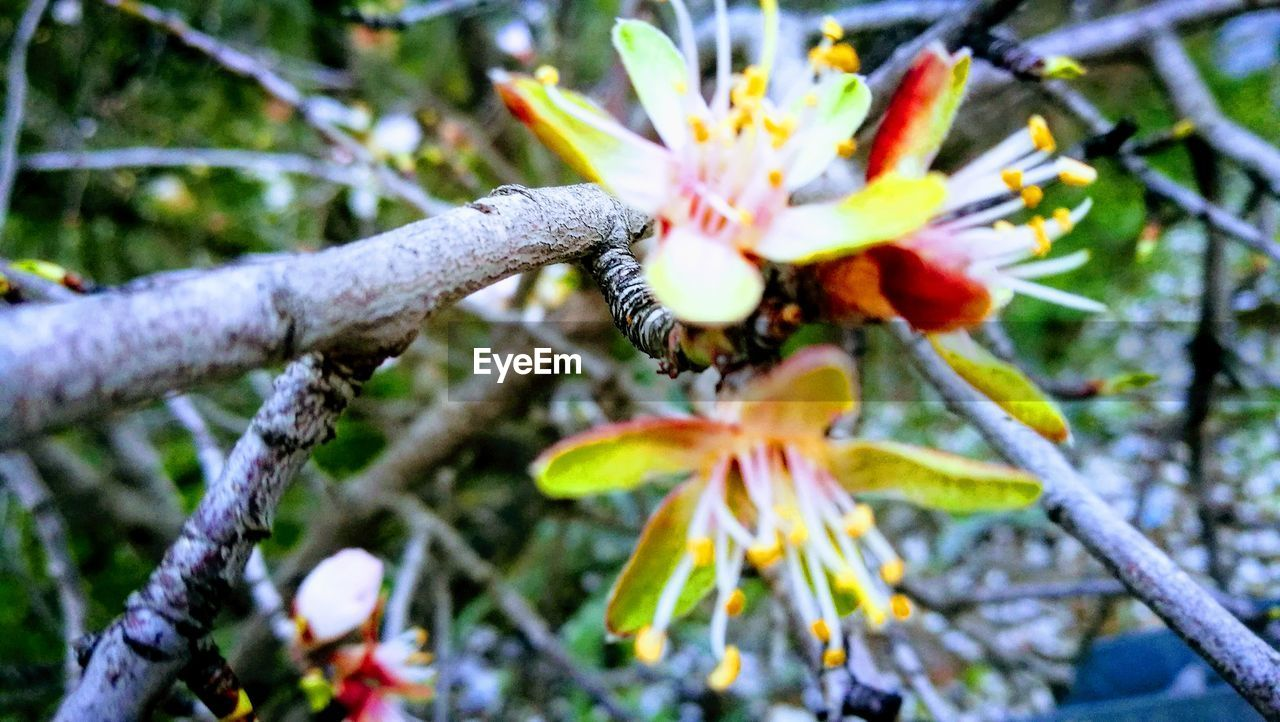 flower, fragility, beauty in nature, nature, growth, freshness, petal, day, flower head, outdoors, branch, springtime, close-up, no people, tree, low angle view