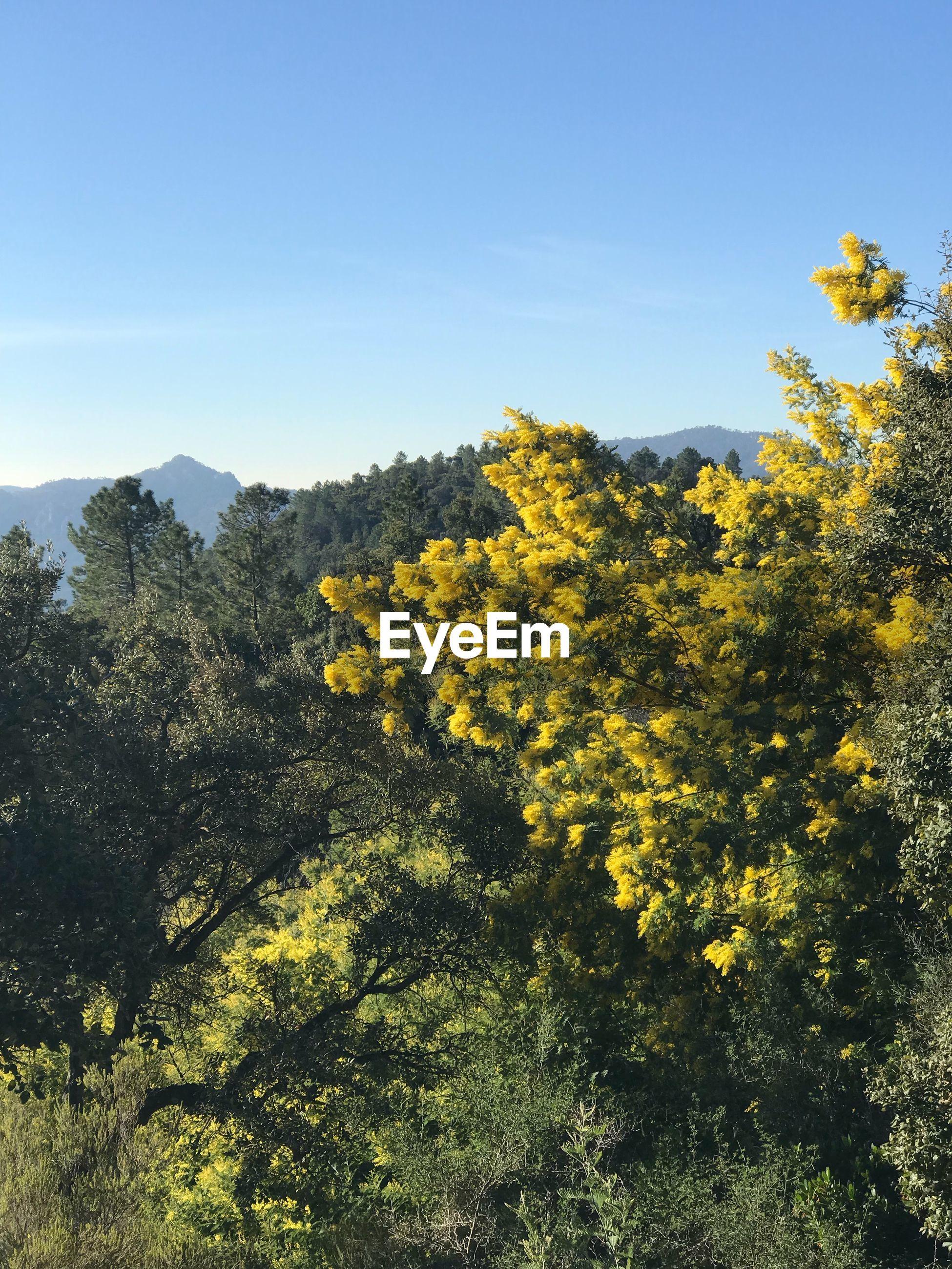 YELLOW FLOWERING PLANTS AGAINST SKY
