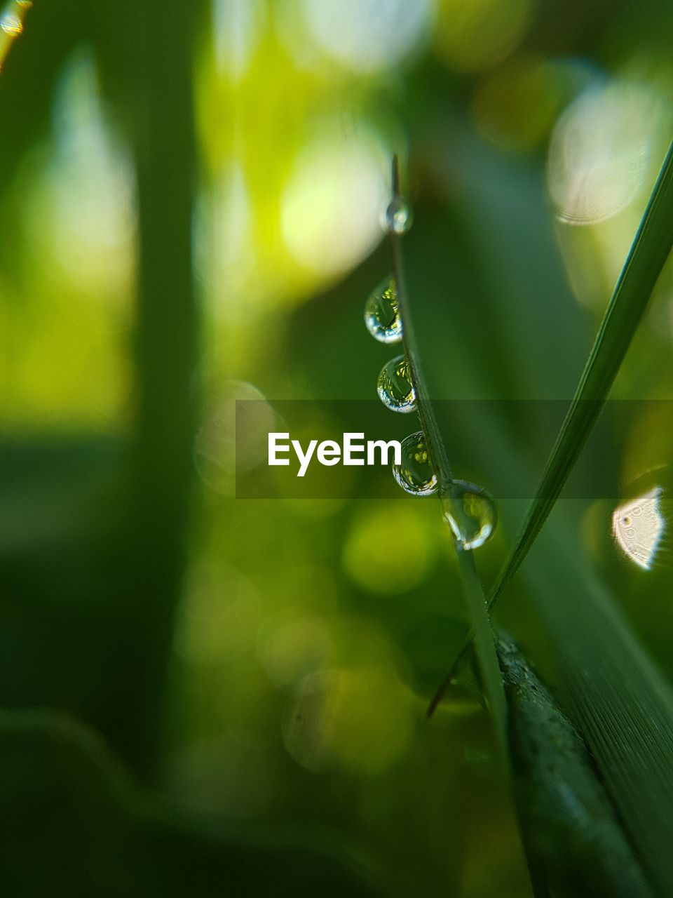 drop, green color, plant, water, wet, growth, beauty in nature, close-up, plant part, leaf, freshness, nature, selective focus, fragility, vulnerability, no people, focus on foreground, day, purity, rain, dew, raindrop, blade of grass, outdoors, rainy season