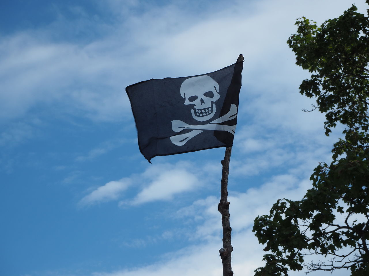 sky, low angle view, cloud - sky, nature, tree, flag, no people, day, plant, patriotism, sign, communication, outdoors, environment, text, pole, symbol, warning sign, blue, wind, warning symbol