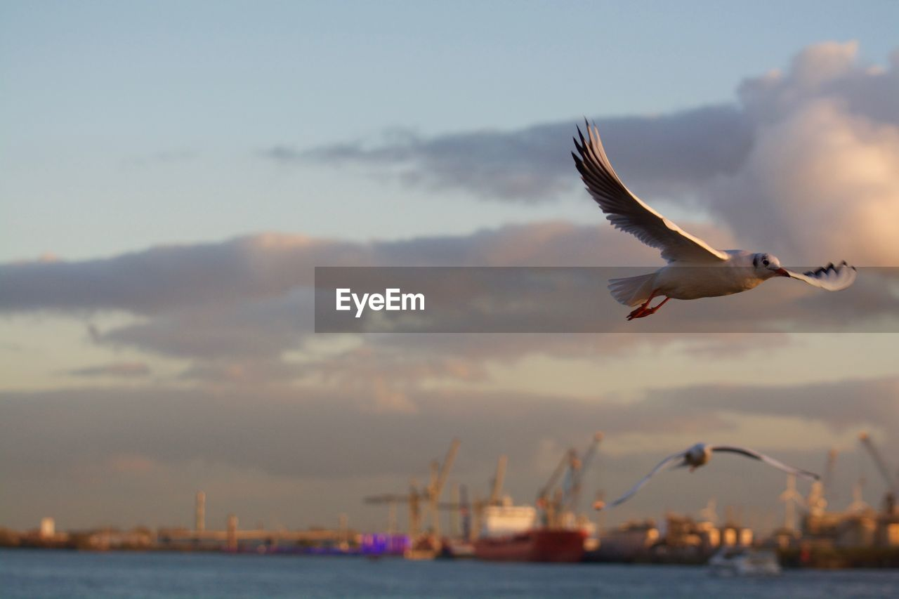 Low angle view of seagulls flying at harbor against sky