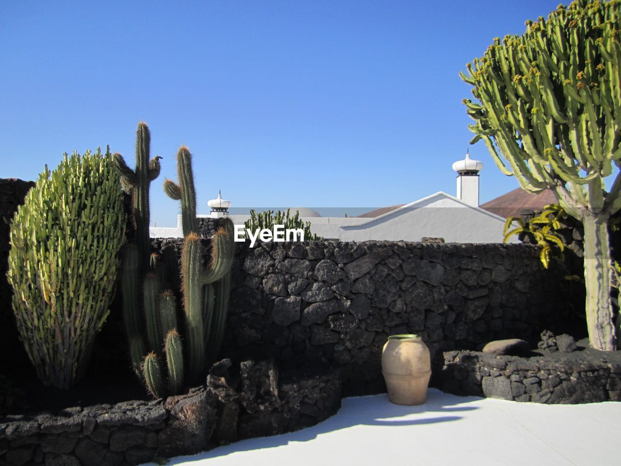 nature, sky, clear sky, sunlight, cactus, plant, day, succulent plant, no people, architecture, growth, built structure, blue, outdoors, potted plant, solid, copy space, travel destinations, green color, wall