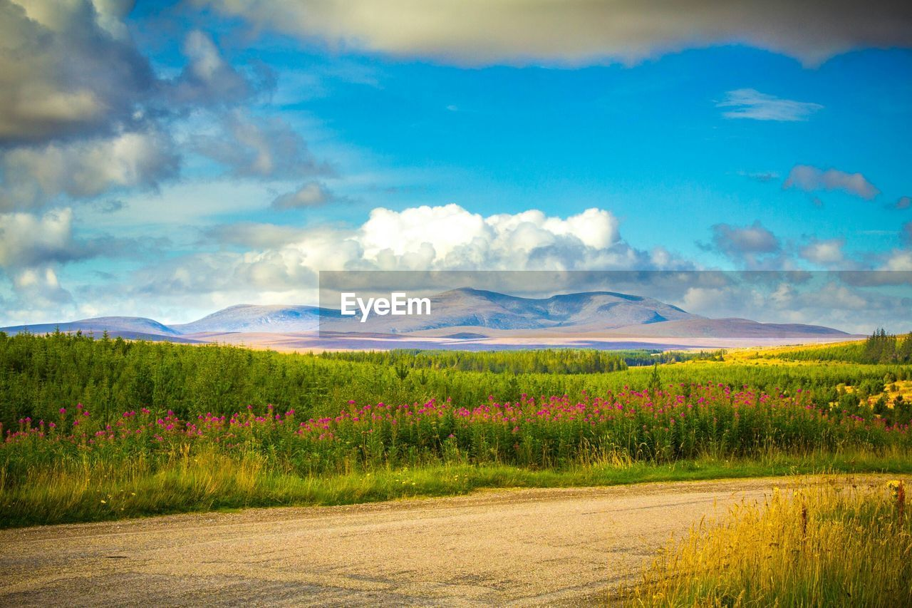 Scenic view of grass landscape against mountains