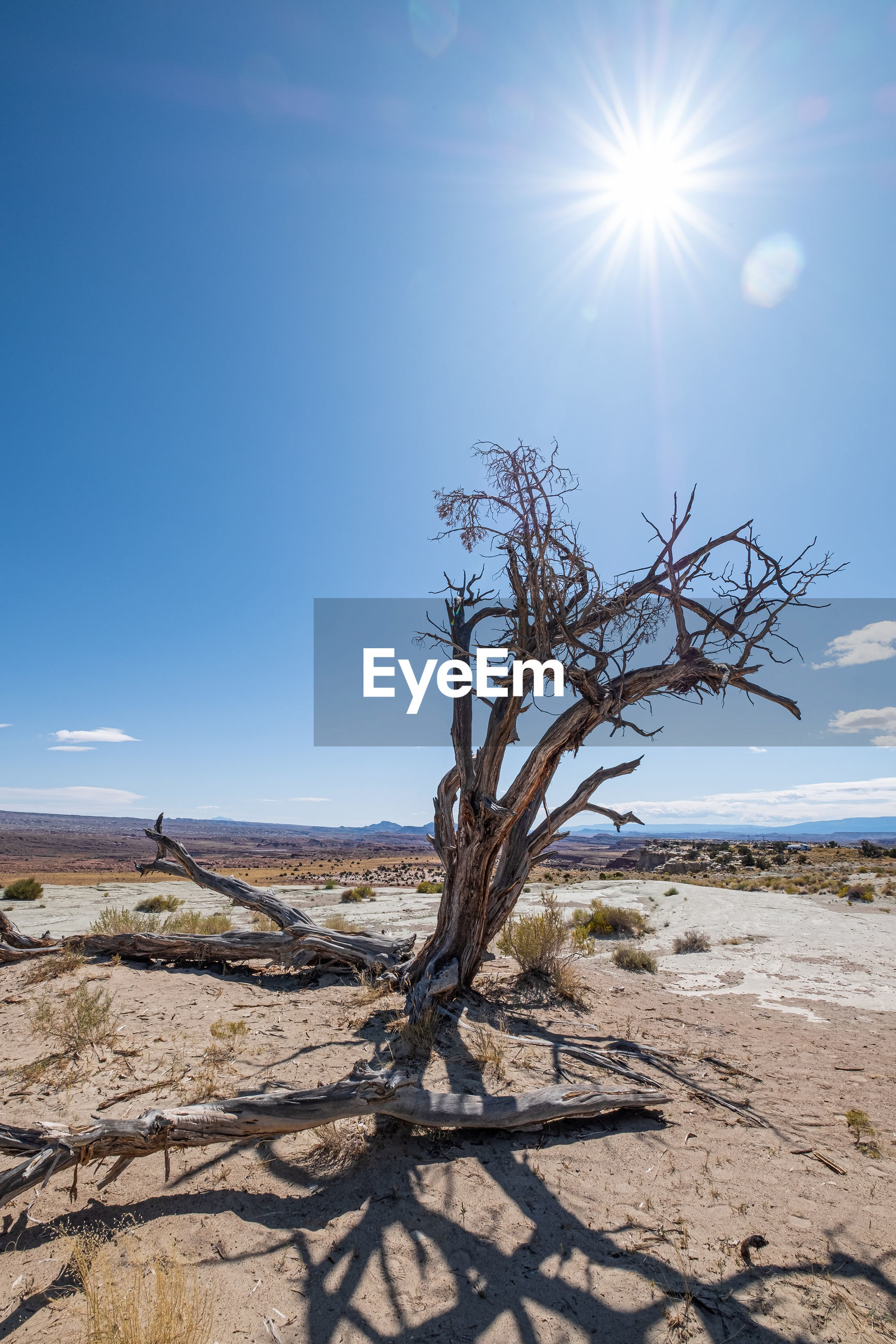 Scenic view of  landscape and bare tree against blue sky on sunny day