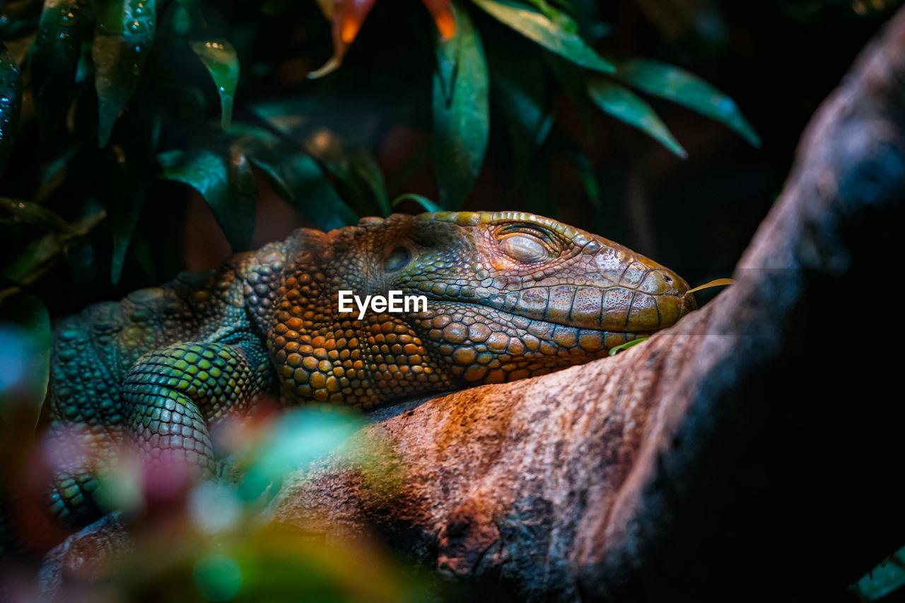 Close-up of lizard on rock.