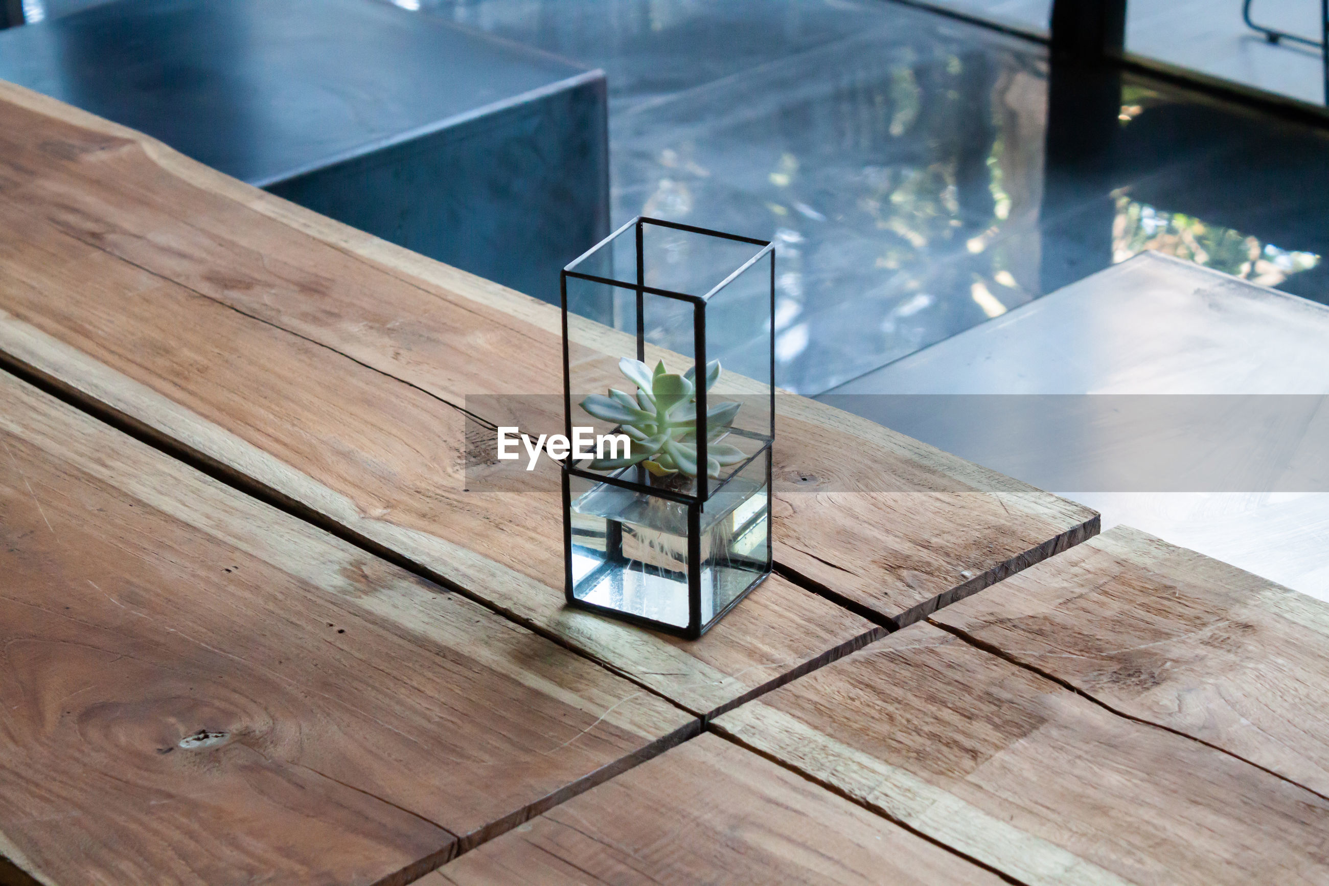 High angle view of plant in glass on table