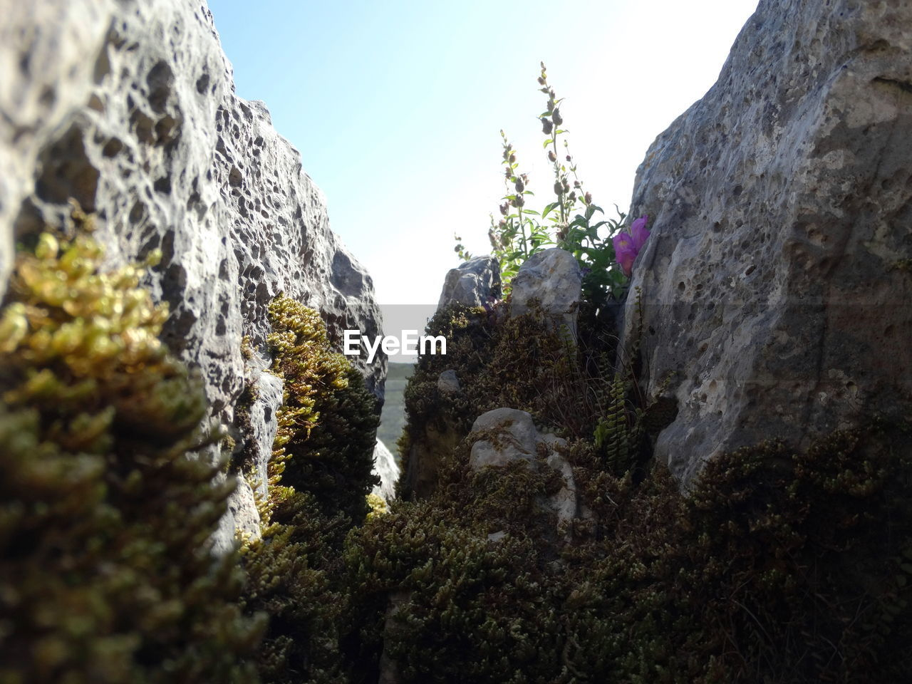 nature, rock - object, beauty in nature, low angle view, rock formation, mountain, day, outdoors, tranquility, scenics, no people, tranquil scene, tree, sky, physical geography, cliff, plant, growth, clear sky, close-up, freshness