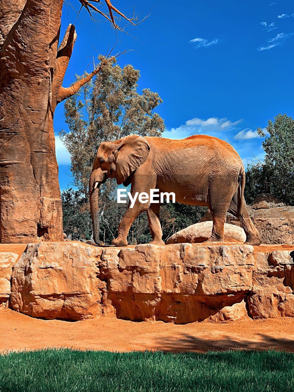 ELEPHANT STANDING ON ROCK
