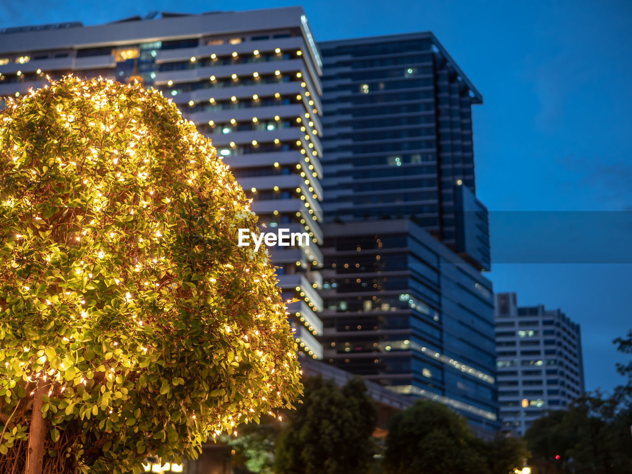 building exterior, built structure, illuminated, tree, architecture, building, plant, city, no people, nature, sky, modern, low angle view, dusk, outdoors, office building exterior, night, glowing, office, residential district, skyscraper