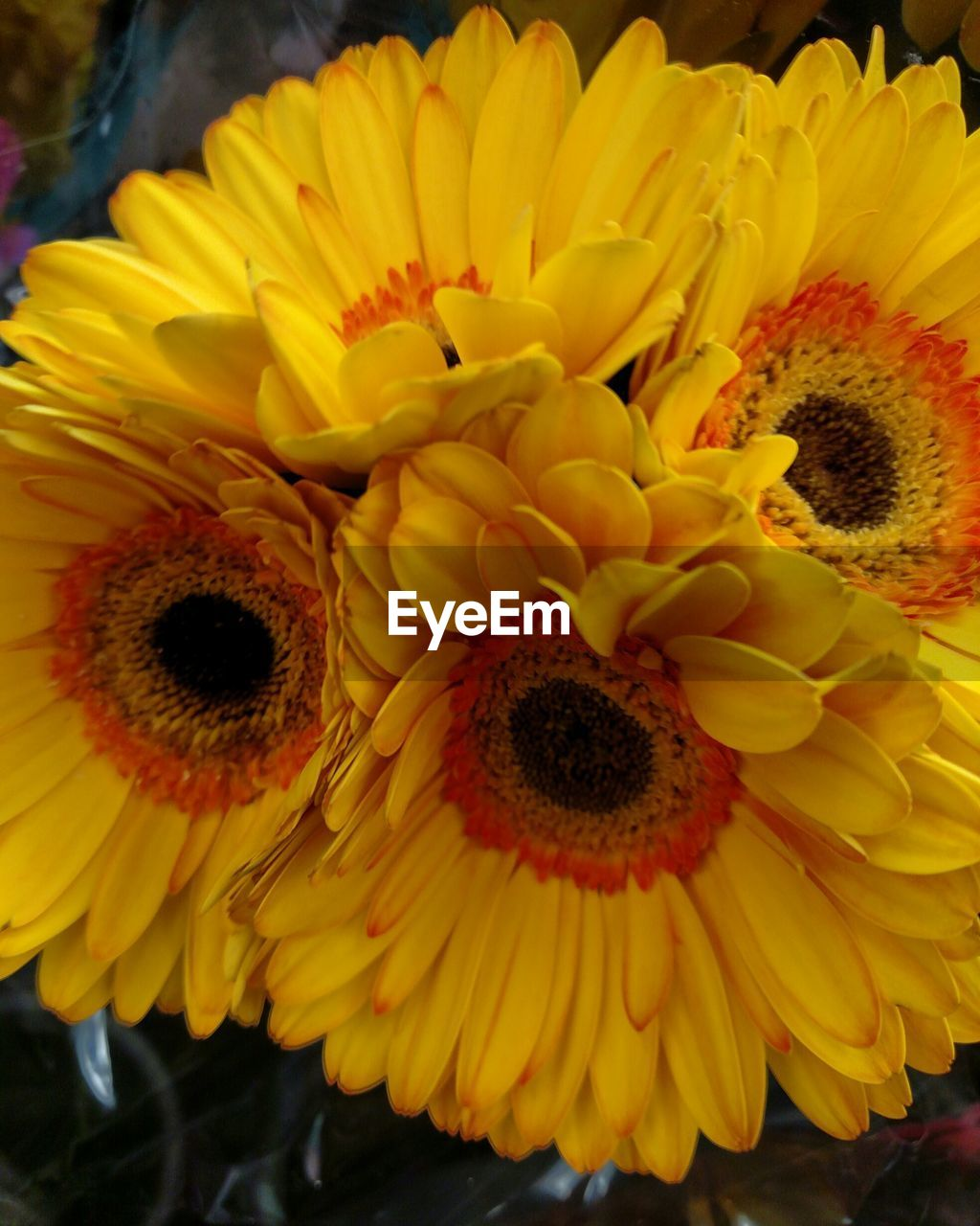 flower, petal, yellow, fragility, beauty in nature, freshness, flower head, nature, growth, plant, pollen, no people, close-up, sunflower, blooming, outdoors, day
