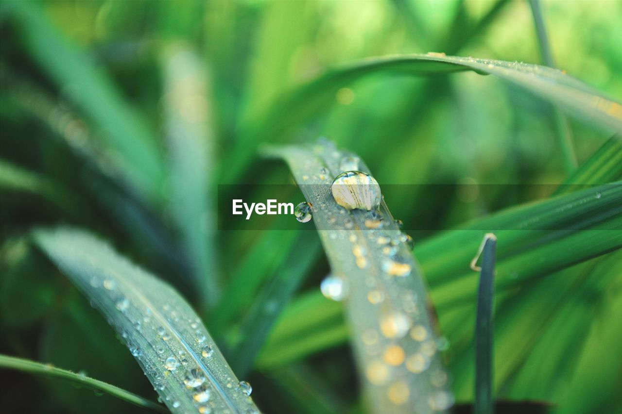 Close-Up Of Dew Drops On Grass