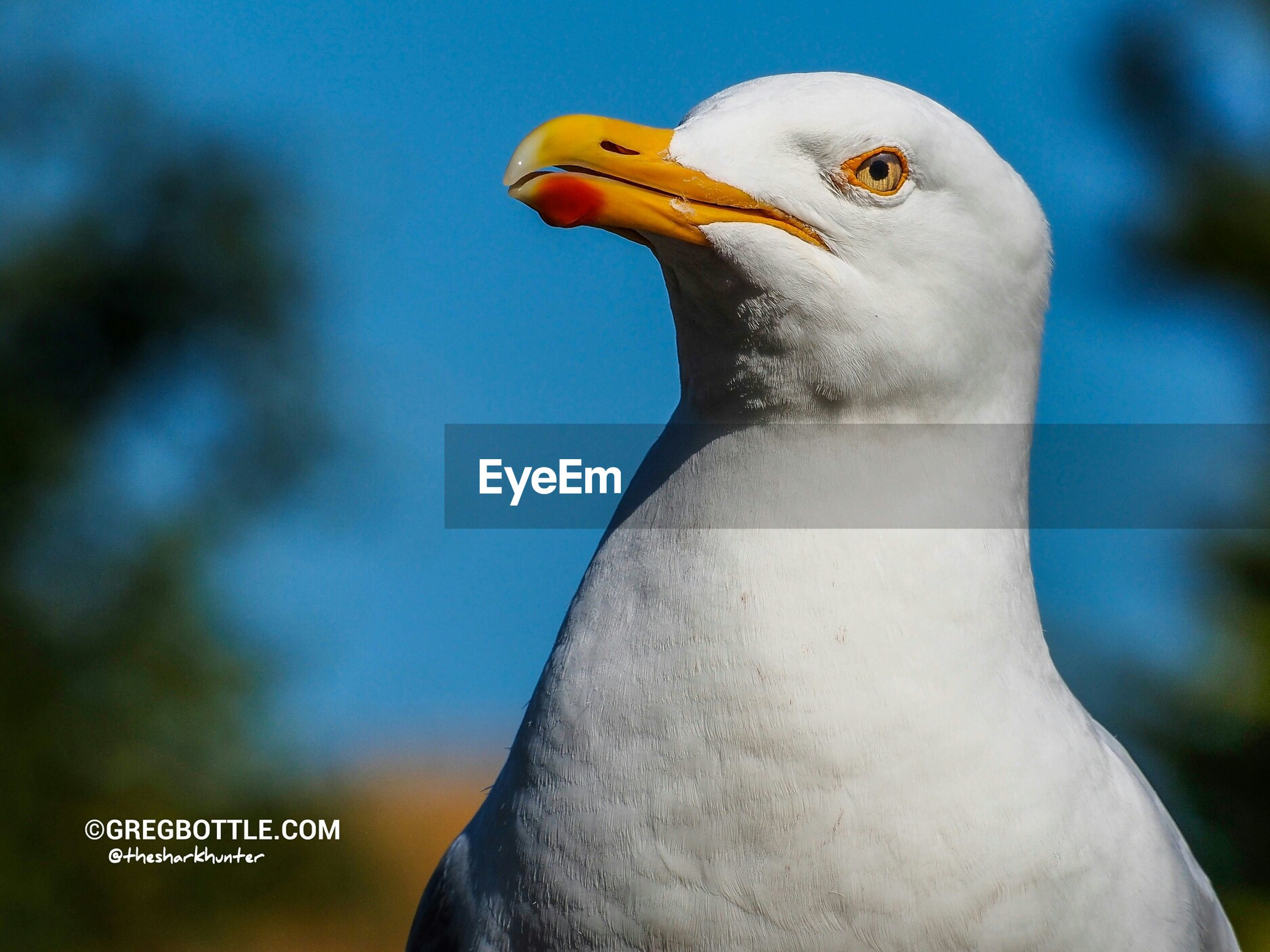 bird, one animal, animal themes, beak, close-up, animals in the wild, wildlife, focus on foreground, animal head, animal body part, white color, seagull, side view, outdoors, day, nature, part of, no people, looking away