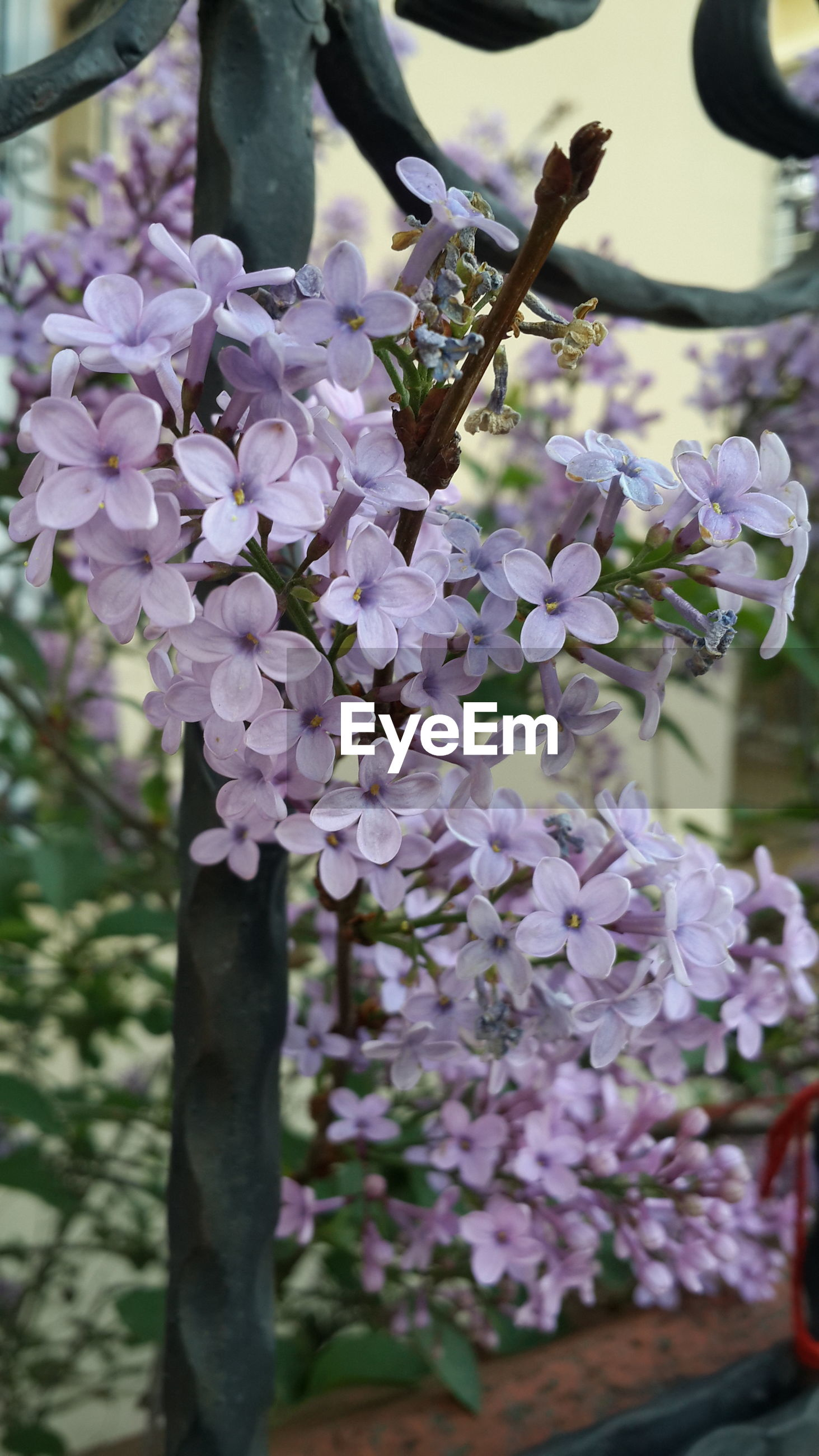 flower, freshness, growth, fragility, beauty in nature, petal, focus on foreground, purple, blooming, nature, close-up, plant, in bloom, flower head, blossom, selective focus, day, branch, park - man made space, outdoors
