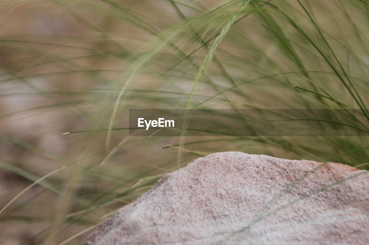 plant, close-up, grass, nature, day, focus on foreground, selective focus, growth, no people, green color, field, land, outdoors, body part, beauty in nature, personal perspective