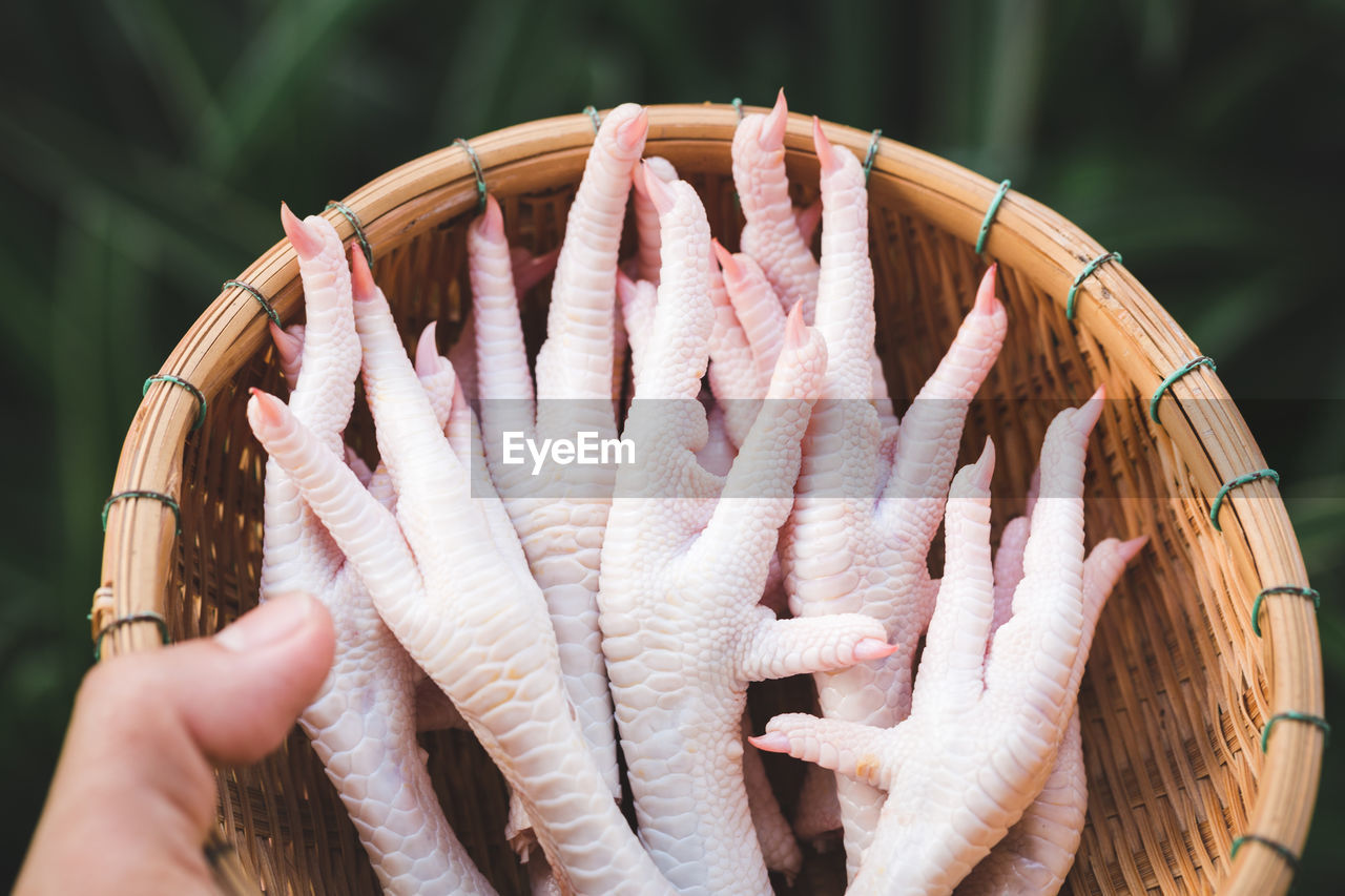 CLOSE-UP OF HAND HOLDING FISH WITH BASKET