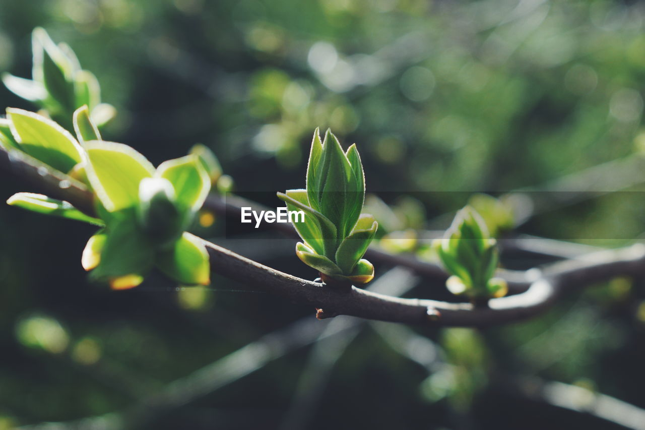plant, growth, green color, nature, plant part, beauty in nature, leaf, day, no people, close-up, selective focus, focus on foreground, freshness, outdoors, fragility, sunlight, vulnerability, beginnings, tranquility, new life