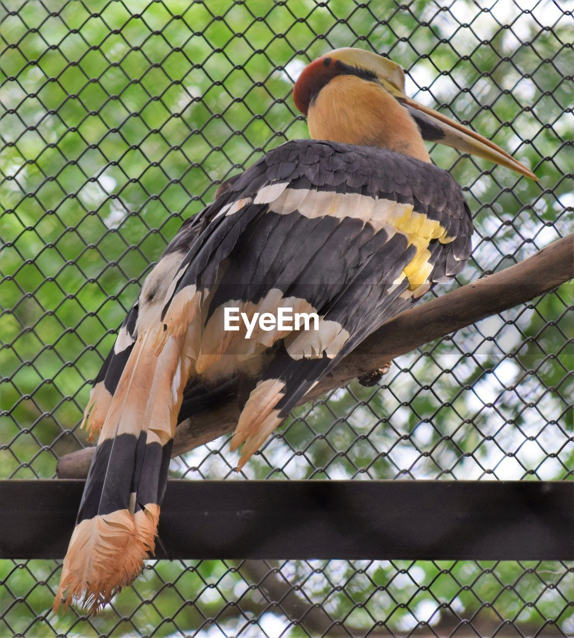 bird, vertebrate, animal, animal themes, animal wildlife, animals in the wild, one animal, animals in captivity, bird of prey, fence, perching, chainlink fence, barrier, boundary, zoo, focus on foreground, day, metal, no people, nature, outdoors, beak