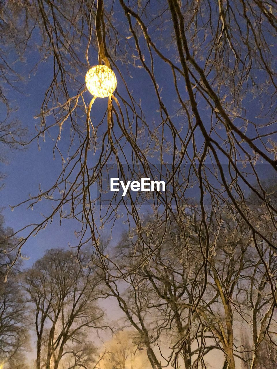 low angle view, bare tree, tree, branch, moon, nature, no people, outdoors, sky, beauty in nature, night, astronomy