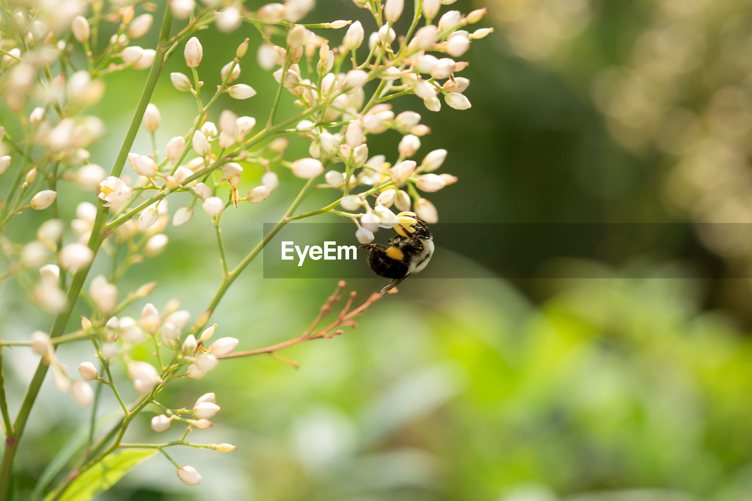 Close-up of bumble bee pollinating on flower bud
