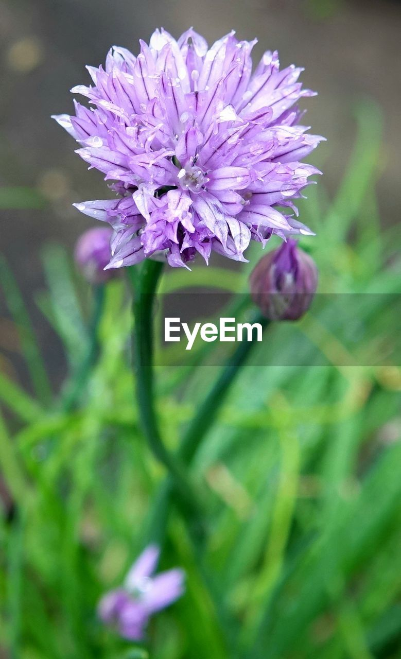 flower, purple, growth, nature, blooming, plant, spring, beauty in nature, no people, outdoors