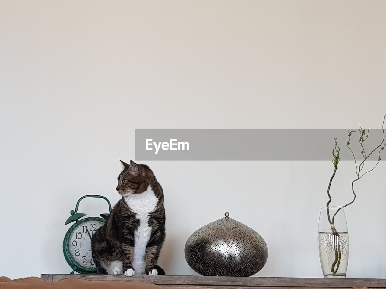 Cat on table by alarm clock and decoration against white wall