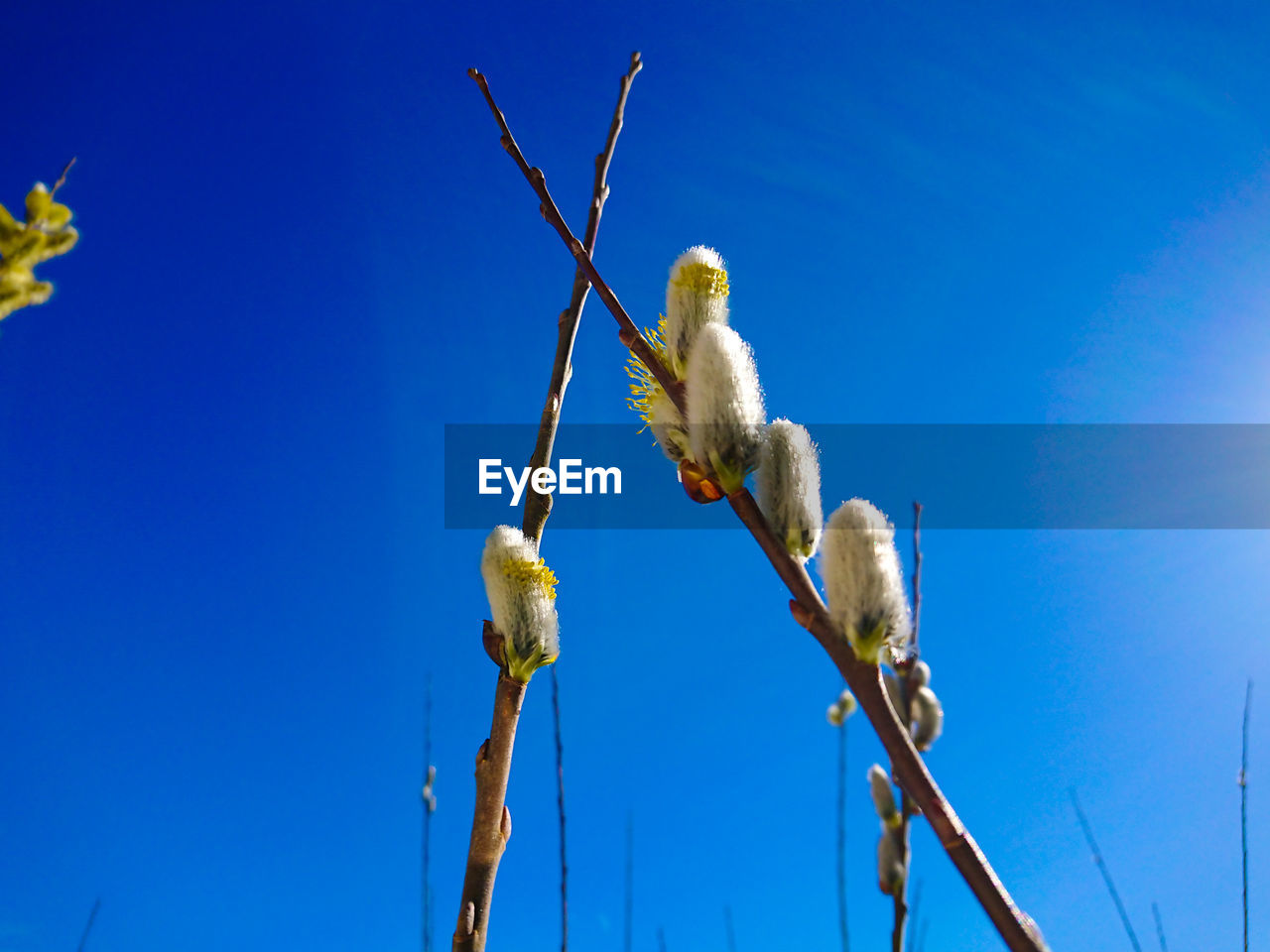 low angle view, sky, blue, animal, bird, vertebrate, animal themes, animal wildlife, animals in the wild, nature, plant, no people, clear sky, branch, tree, day, one animal, perching, outdoors, beauty in nature