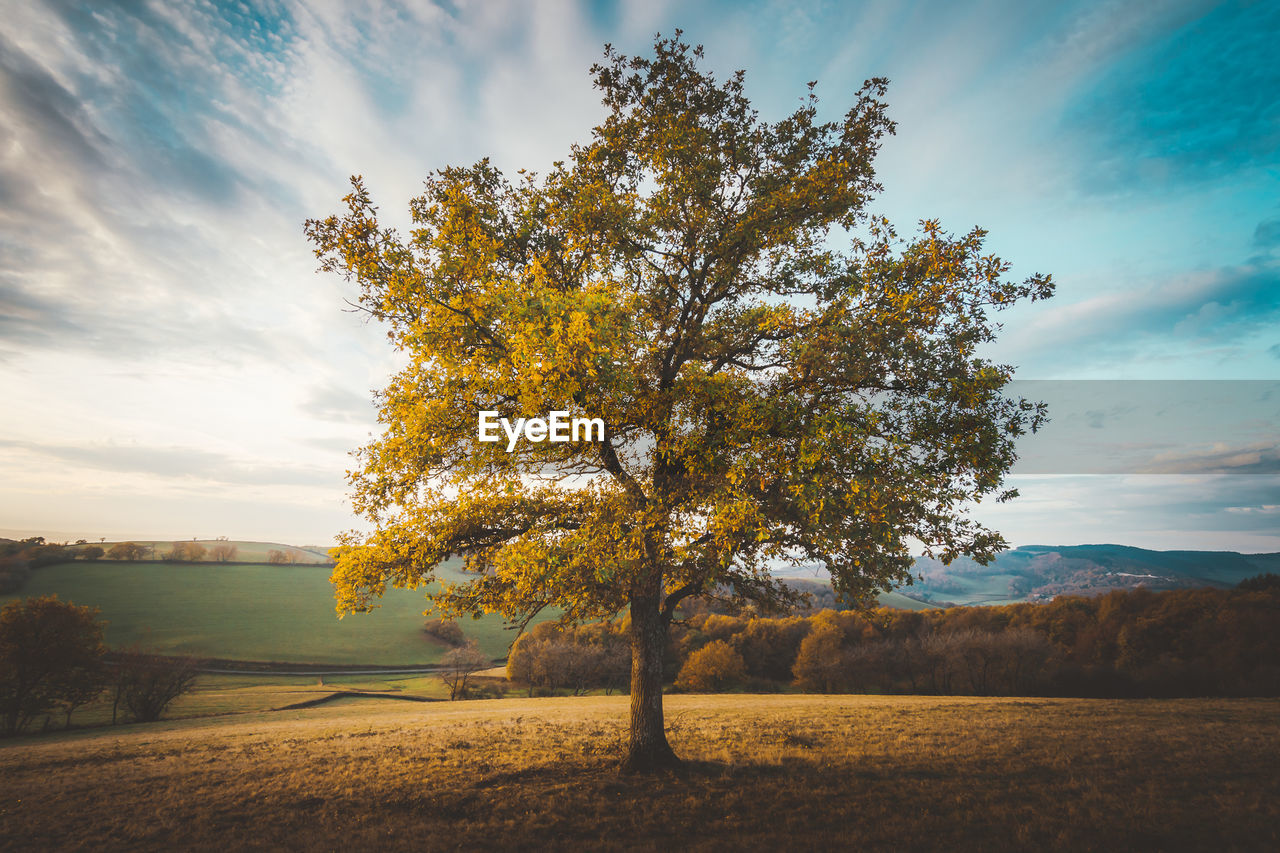 tree, sky, beauty in nature, cloud - sky, plant, tranquility, tranquil scene, scenics - nature, nature, field, landscape, environment, non-urban scene, autumn, land, no people, change, growth, outdoors, idyllic