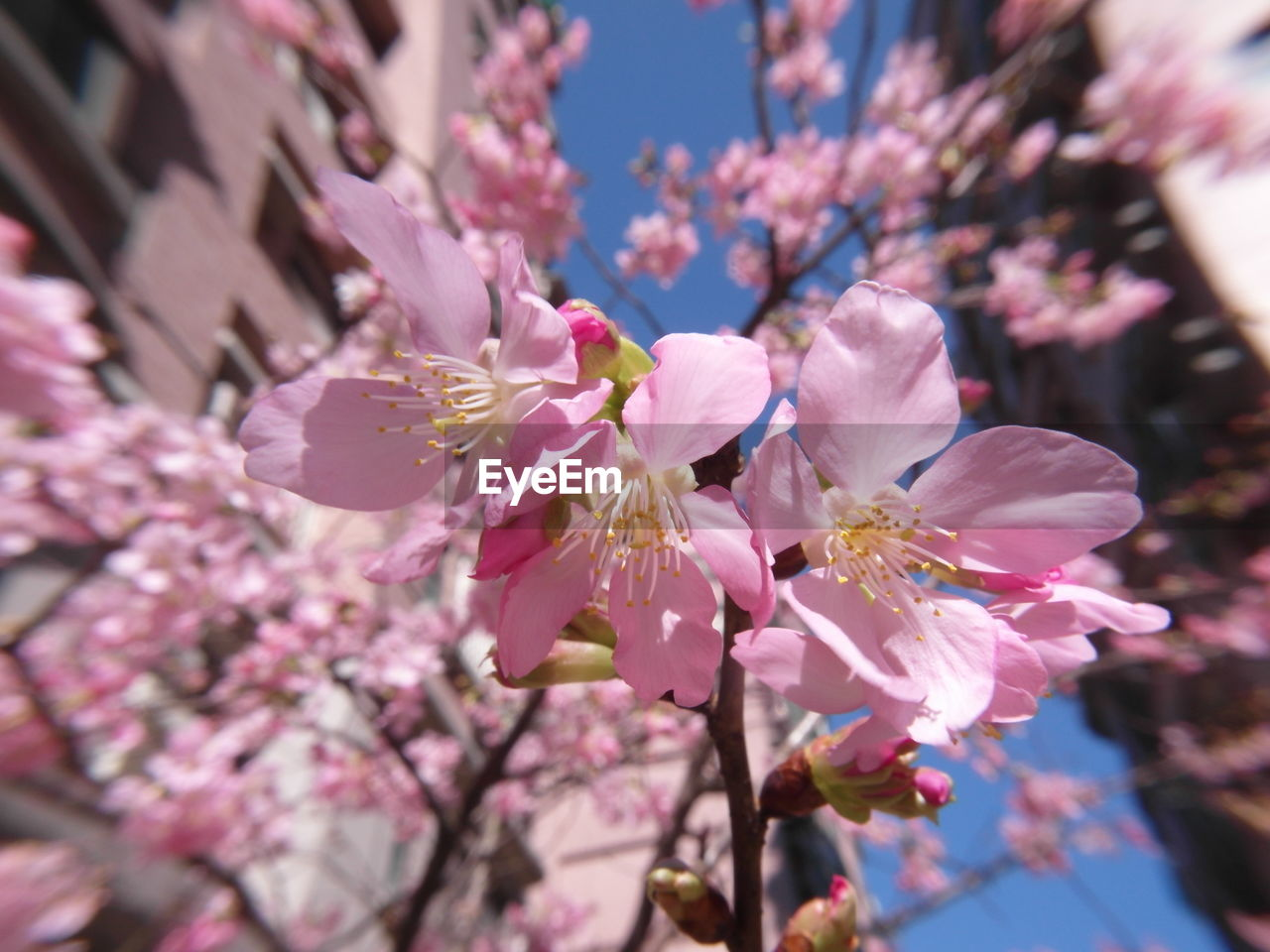 flower, fragility, blossom, nature, growth, beauty in nature, petal, pink color, freshness, springtime, tree, no people, branch, day, outdoors, blooming, close-up, flower head