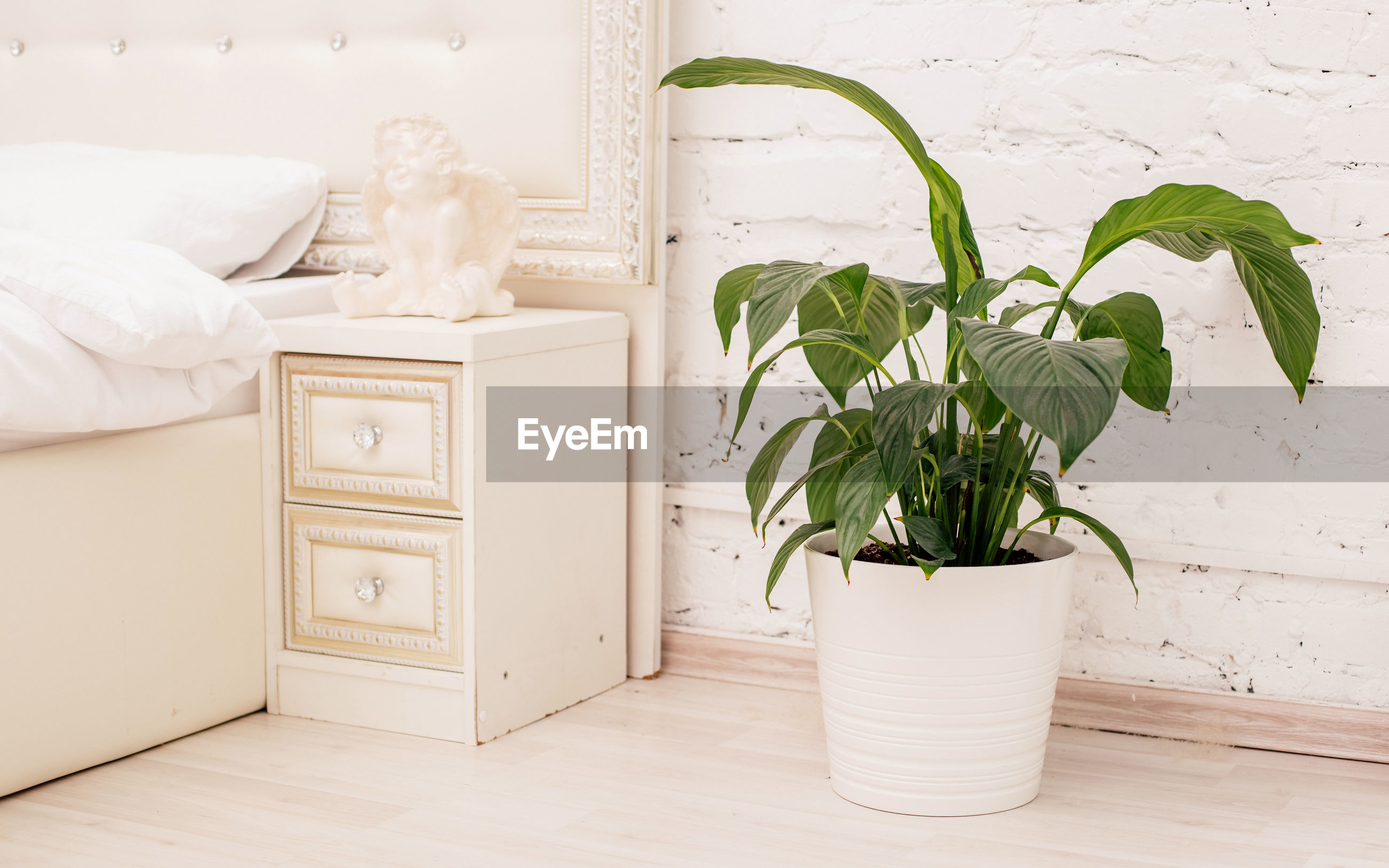 POTTED PLANT ON WHITE TABLE