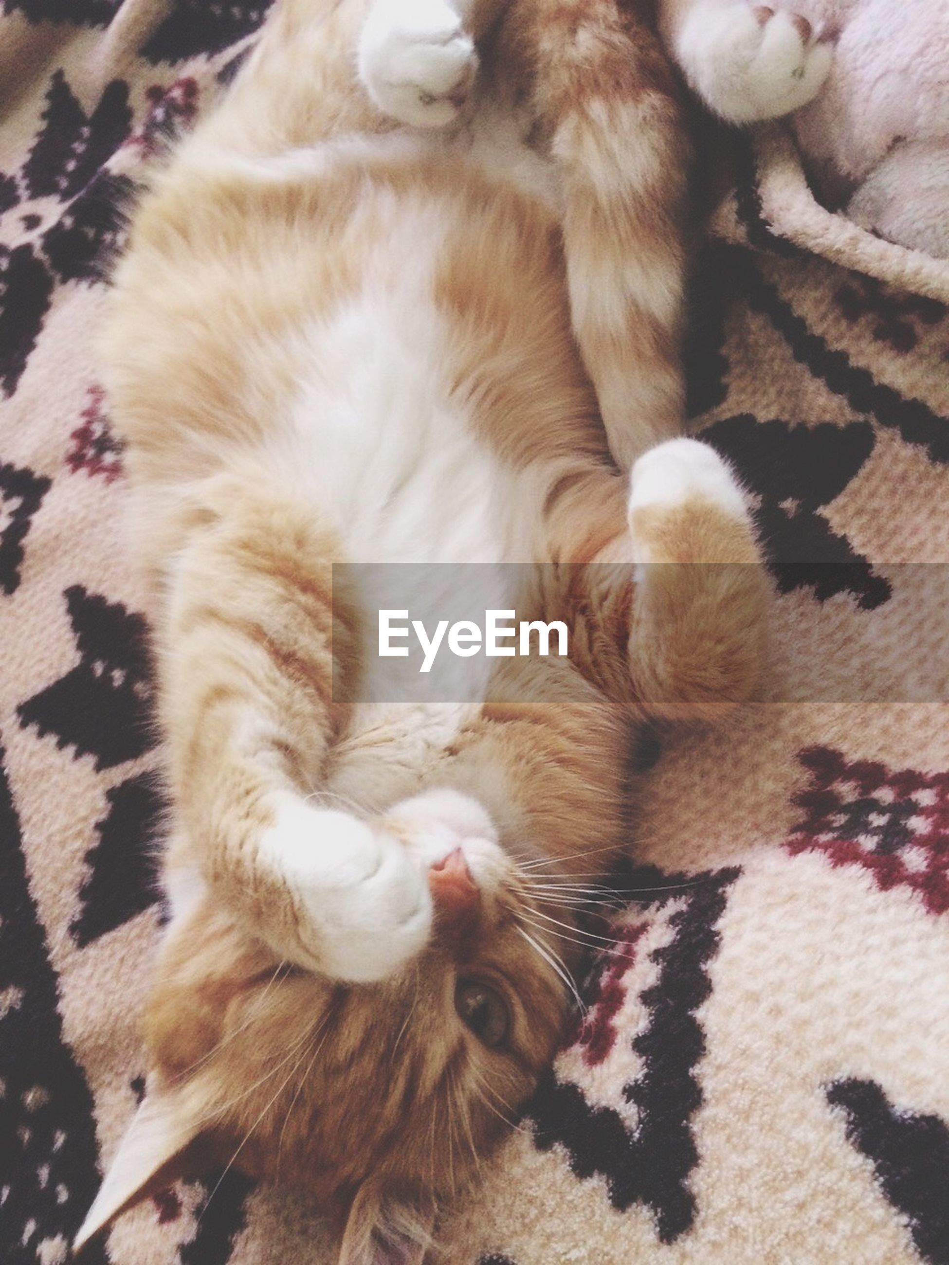 animal themes, domestic animals, pets, mammal, indoors, one animal, relaxation, domestic cat, sleeping, cat, resting, high angle view, feline, lying down, two animals, whisker, close-up, home interior, young animal, eyes closed