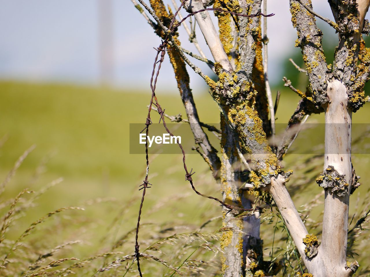 plant, growth, focus on foreground, day, close-up, no people, nature, tree, outdoors, beauty in nature, field, flowering plant, flower, sunlight, fragility, tranquility, green color, branch, vulnerability, land, lichen