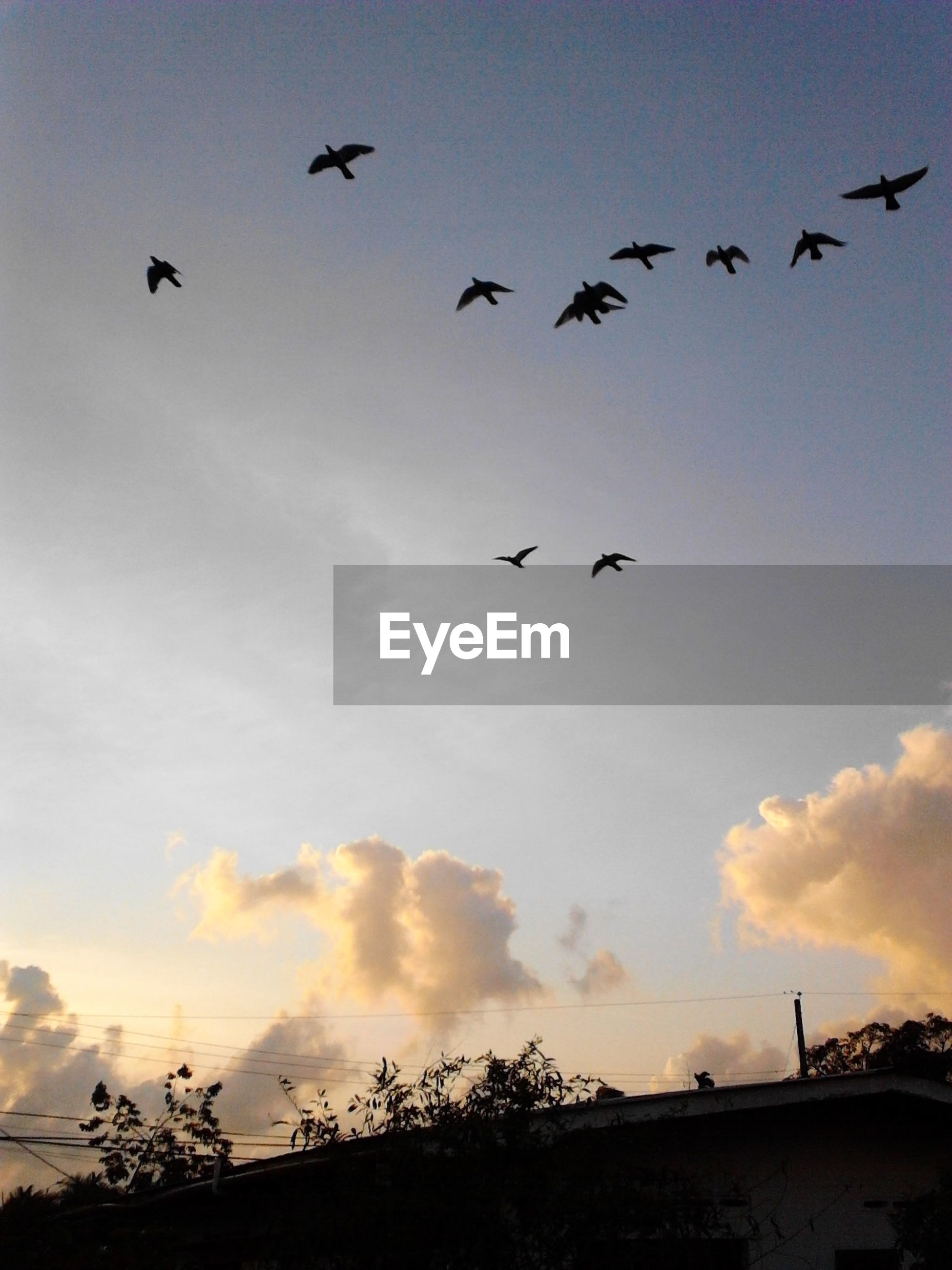 bird, flying, animal themes, animals in the wild, wildlife, flock of birds, low angle view, silhouette, sky, mid-air, spread wings, nature, sunset, cloud - sky, medium group of animals, beauty in nature, cloud, outdoors, scenics
