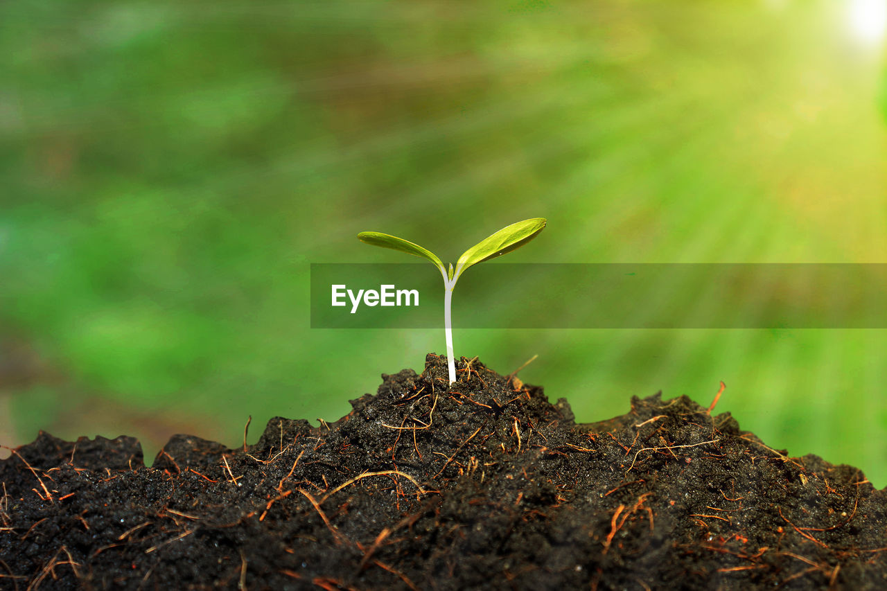 growth, leaf, plant part, nature, beauty in nature, plant, beginnings, vulnerability, fragility, seedling, green color, close-up, no people, new life, selective focus, day, field, sapling, focus on foreground, land, outdoors, small, gardening, plantation