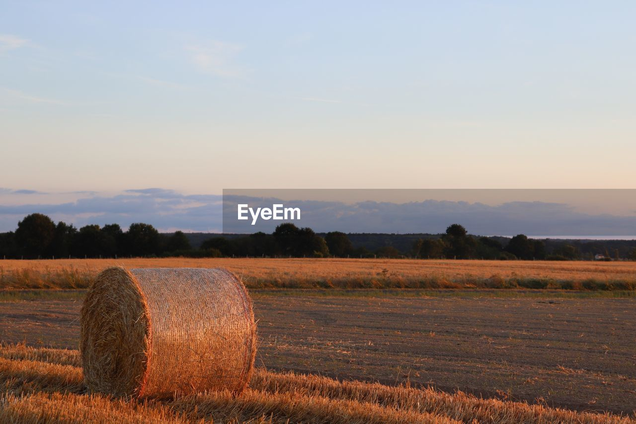 landscape, field, sky, land, environment, hay, tranquility, tranquil scene, agriculture, farm, scenics - nature, bale, beauty in nature, rural scene, plant, nature, harvesting, rolled up, no people, tree, outdoors