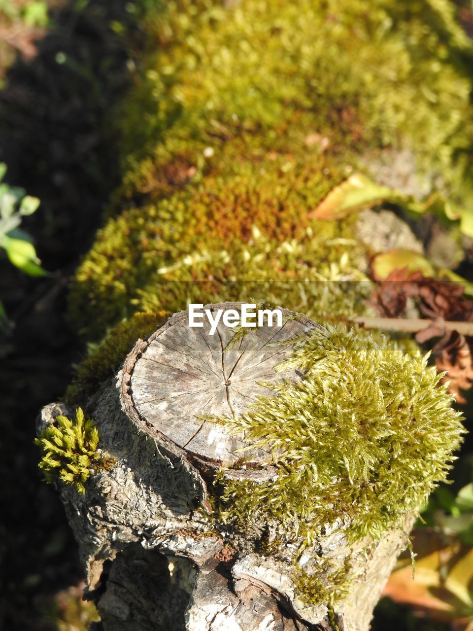 plant, nature, close-up, day, focus on foreground, no people, tree, sunlight, growth, leaf, plant part, moss, outdoors, beauty in nature, tree trunk, trunk, bark, green color, land, selective focus